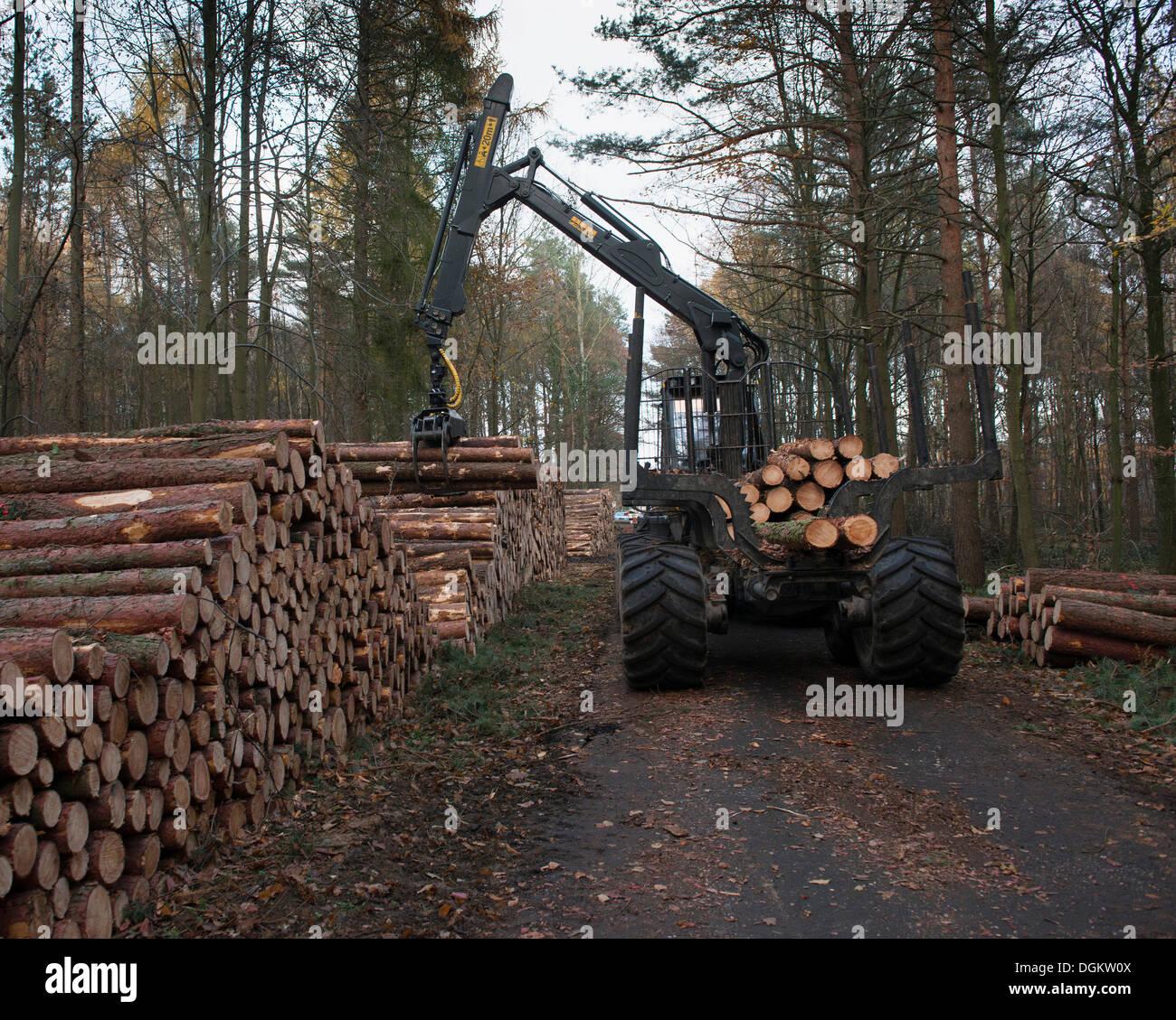 Forestry forwarder harvesting timber, loading stacked logs, Bonn, Rhineland, North Rhine-Westphalia, Germany - Stock Image