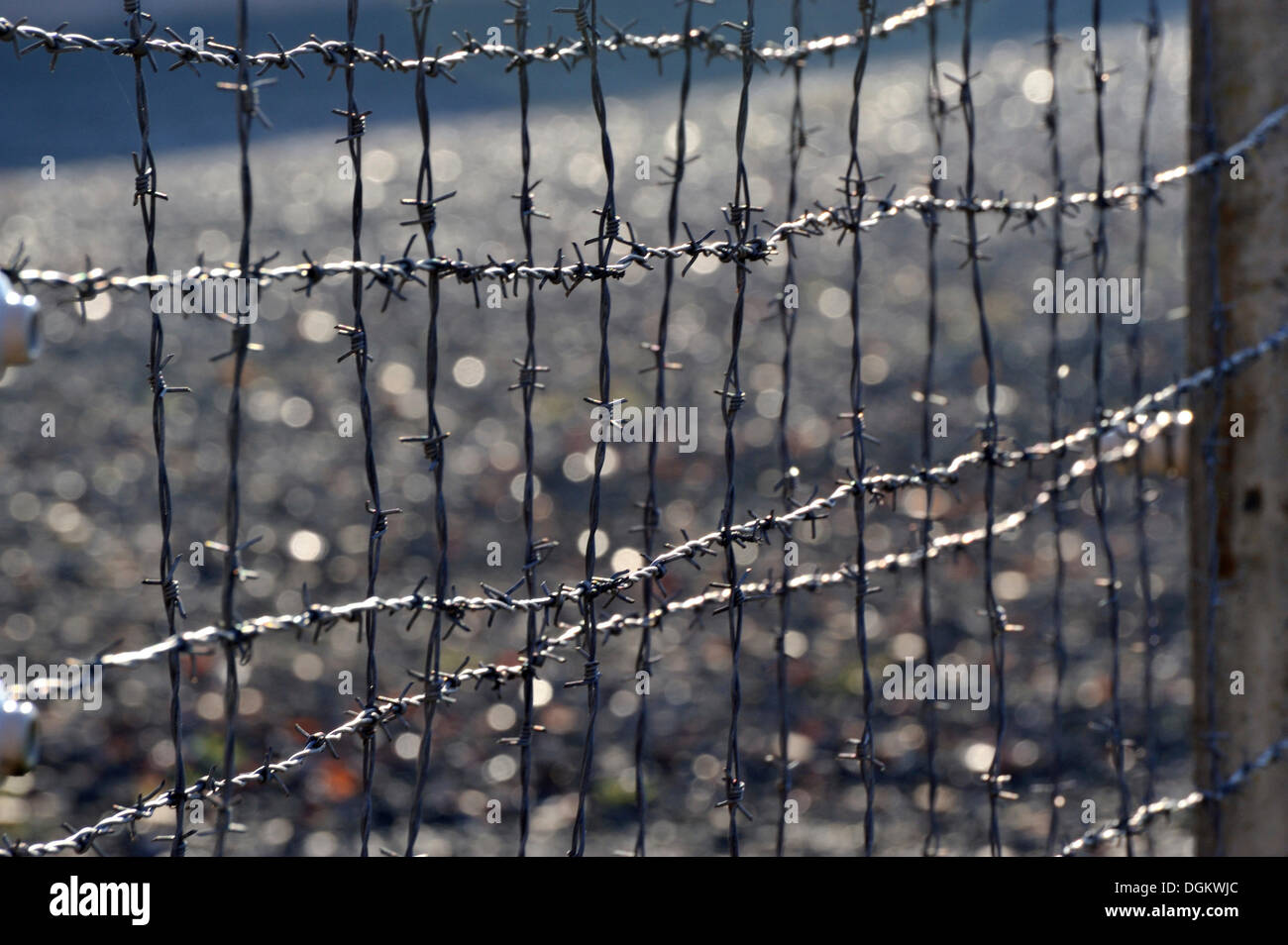 Barbed wire fence, Neuengamme Concentration Camp Memorial Stock ...