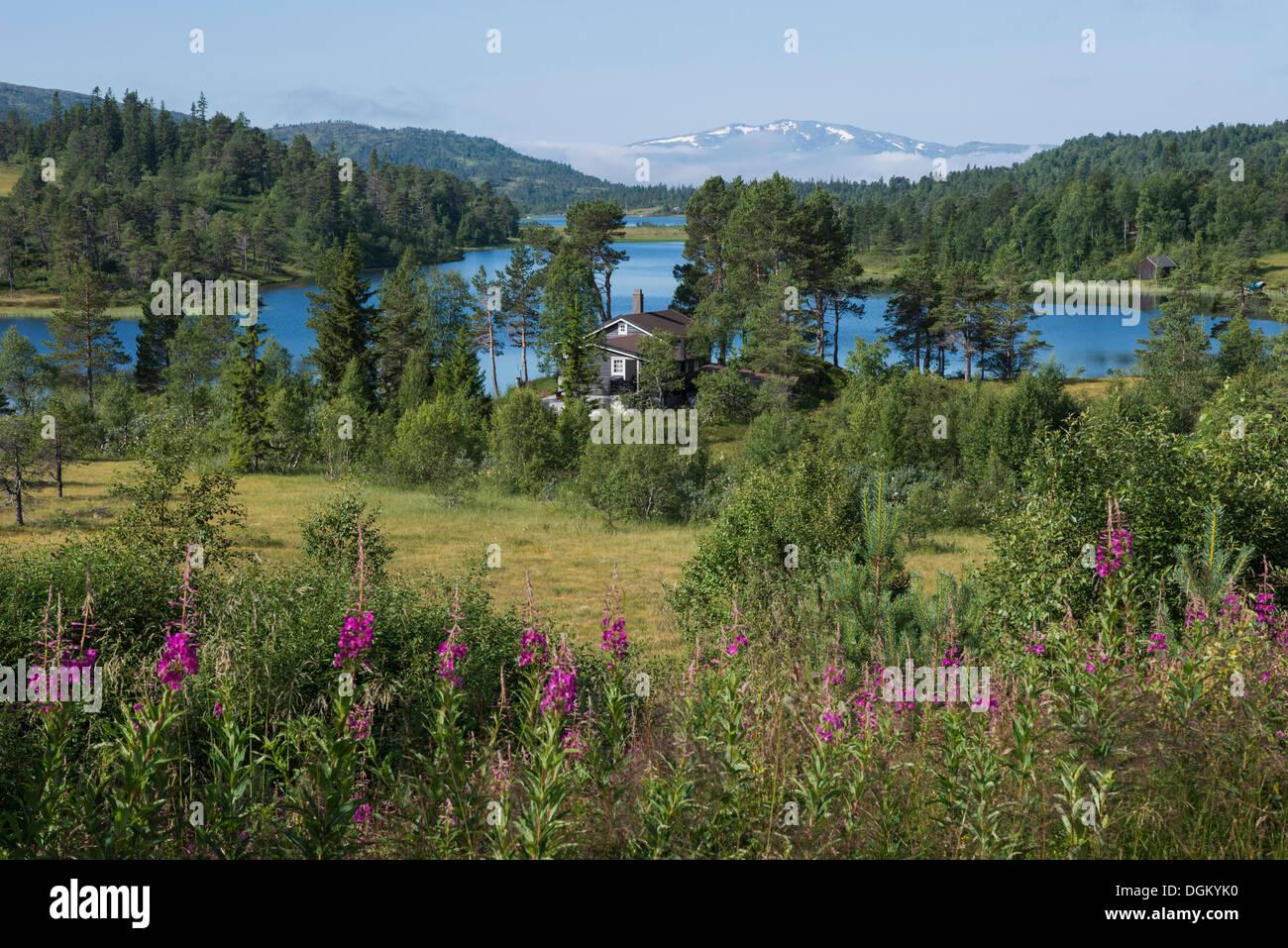 Hilly landscape with a lake and a forest, Lake Søvatnet, Sør-Trøndelag, Trøndelag, Norway - Stock Image