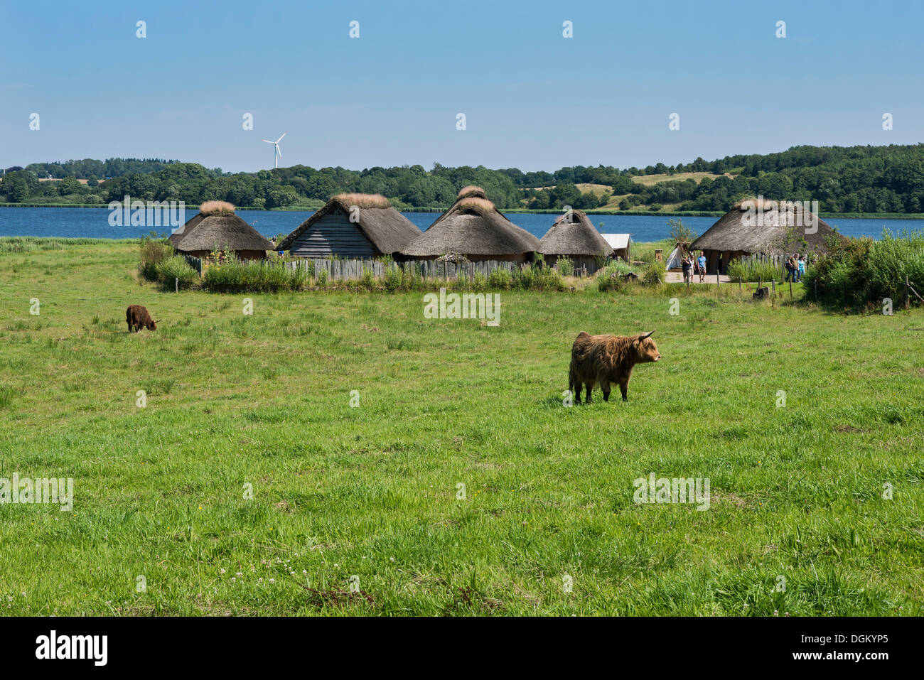 Thatched cottages beside a lake, pasture and cattle at the front, Hedeby Viking Museum, open-air museum, Busdorf - Stock Image