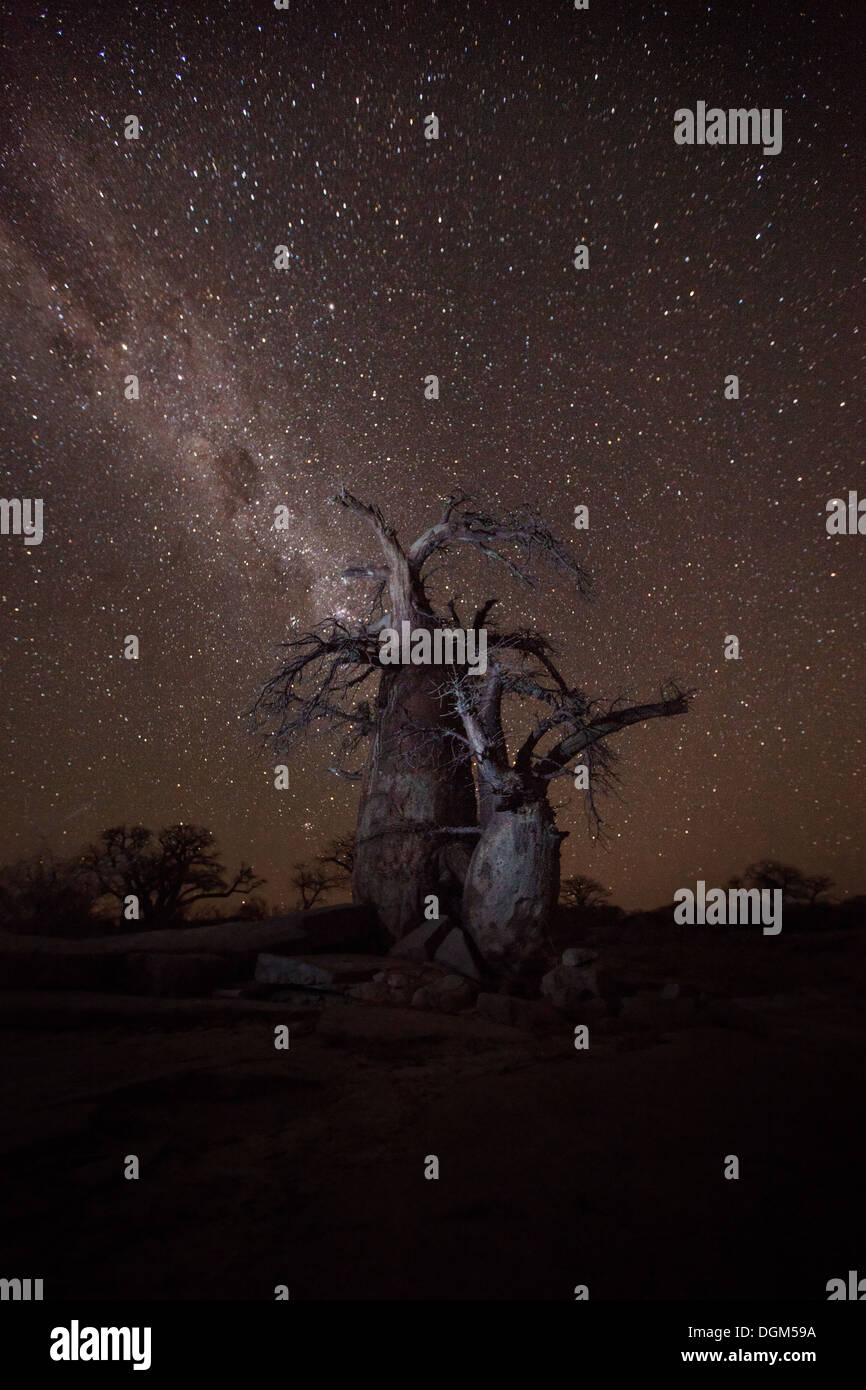 Baobab trees under the milky way - Stock Image
