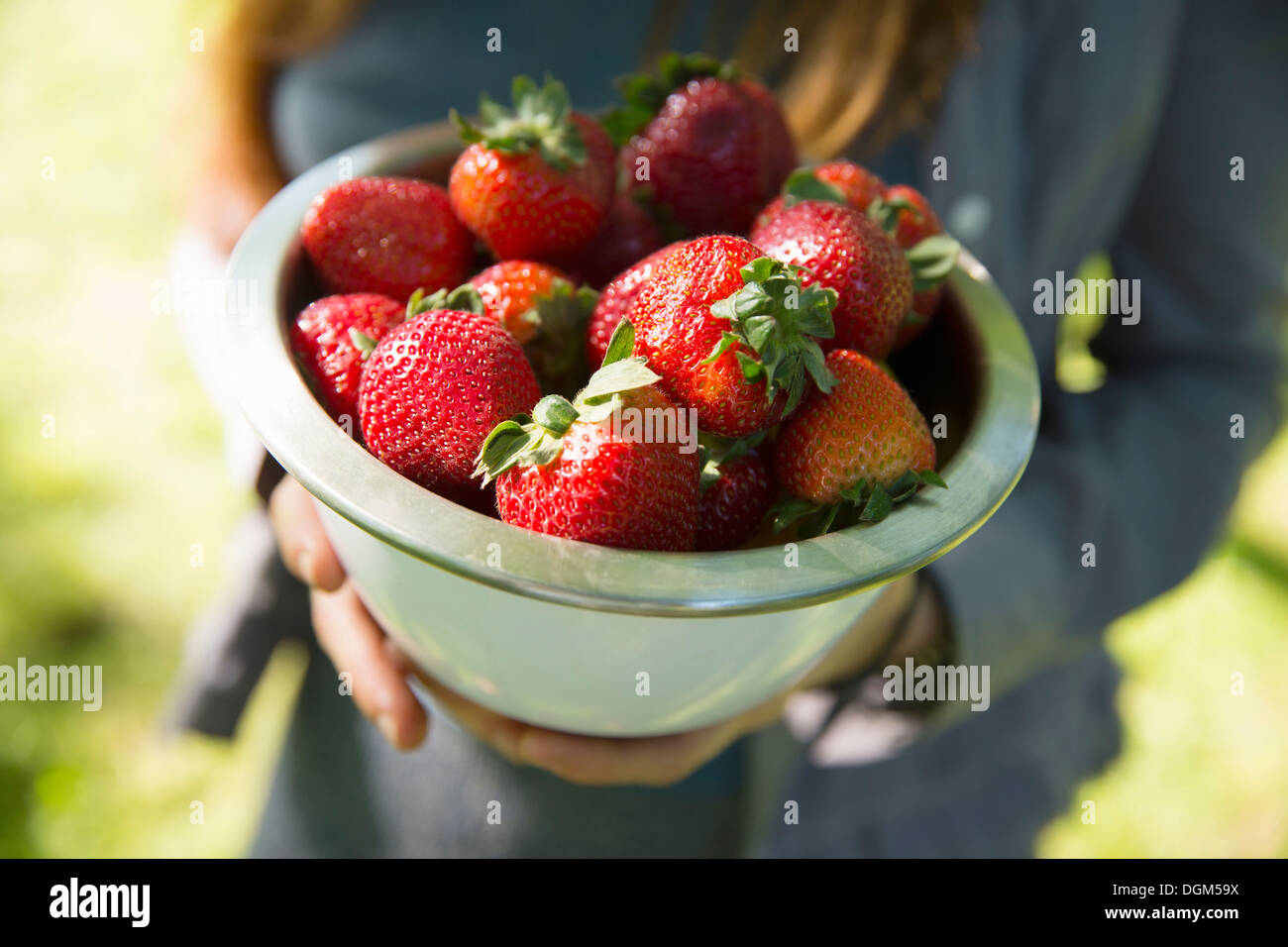 On the farm. A woman carrying a bowl of organic fresh picked strawberries. - Stock Image