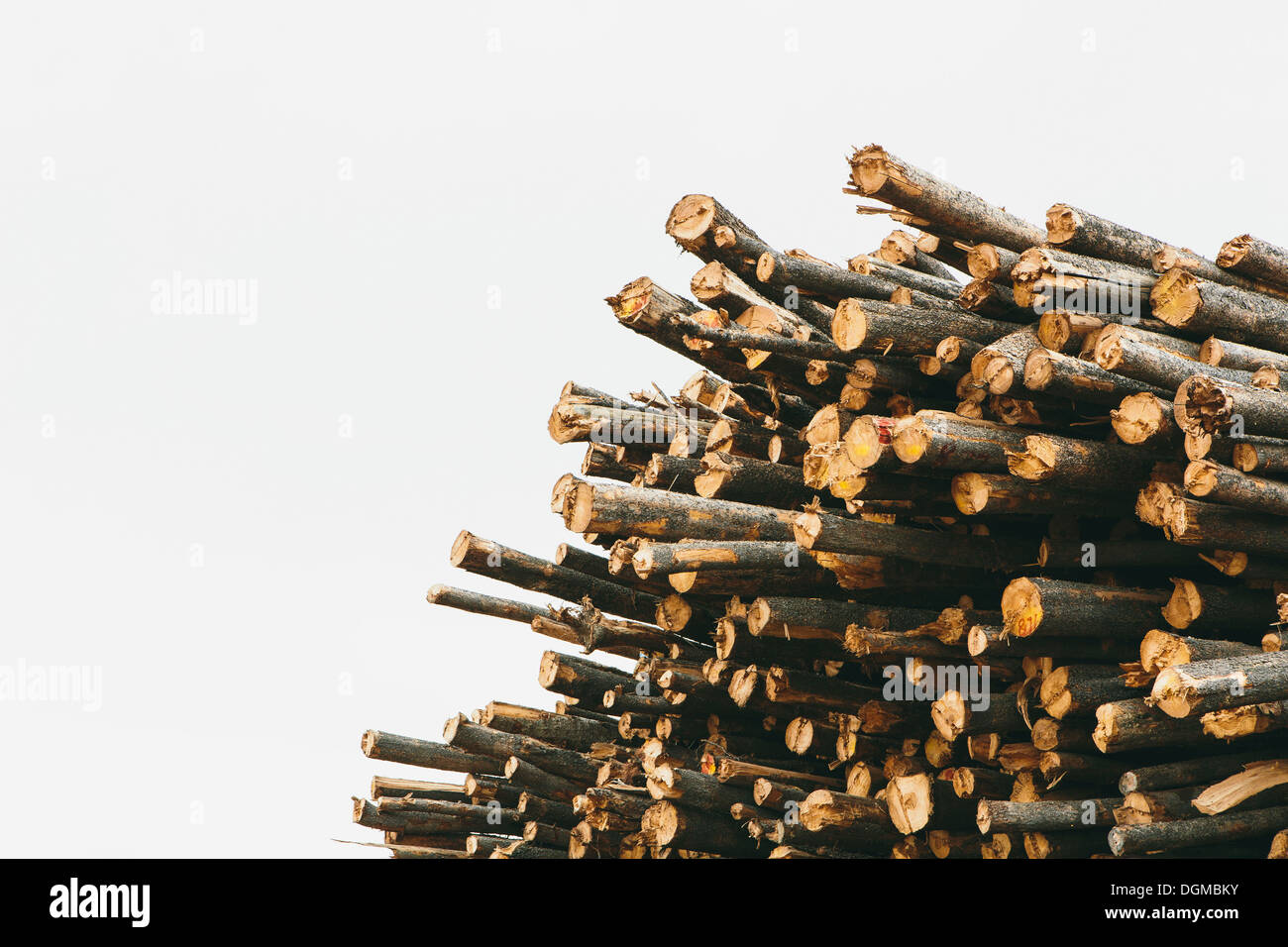 A stack of cut timber logs, Lodge Pole pine trees at a lumber mill. - Stock Image