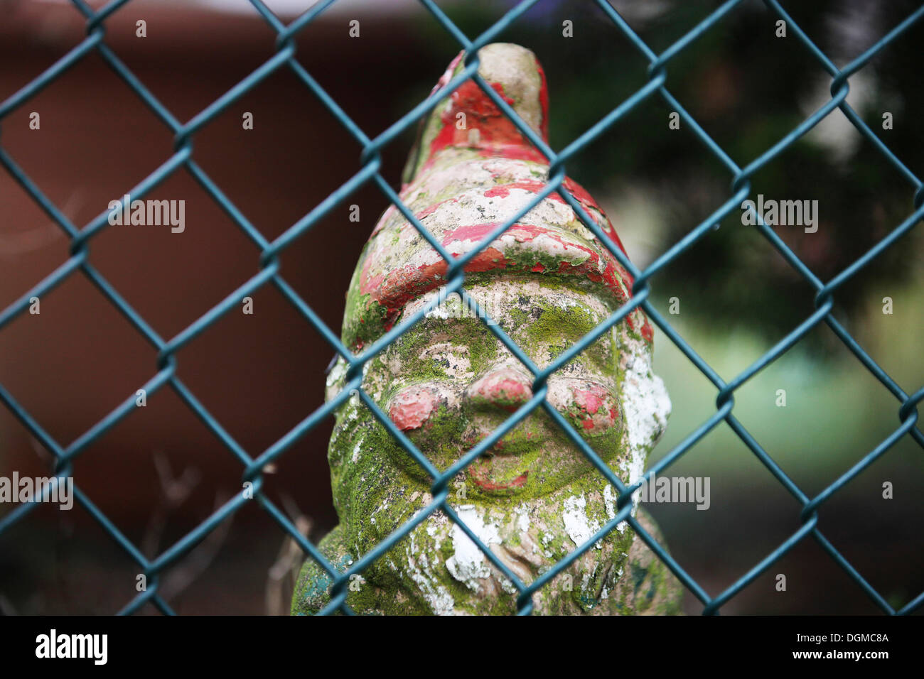 Weathered garden gnome behind a mesh wire fence in an allotment - Stock Image