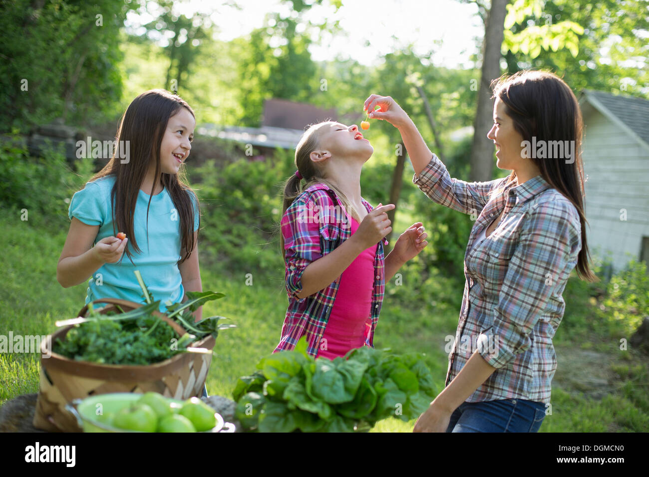Organic farm. Summer party. A woman feeding a young girl fresh picked cherries. Stock Photo