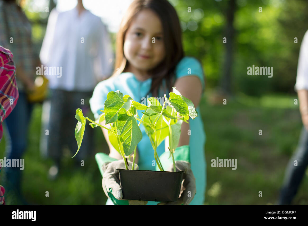 Organic farm. Summer party. A young girl holding out a tray of seedling plants. - Stock Image