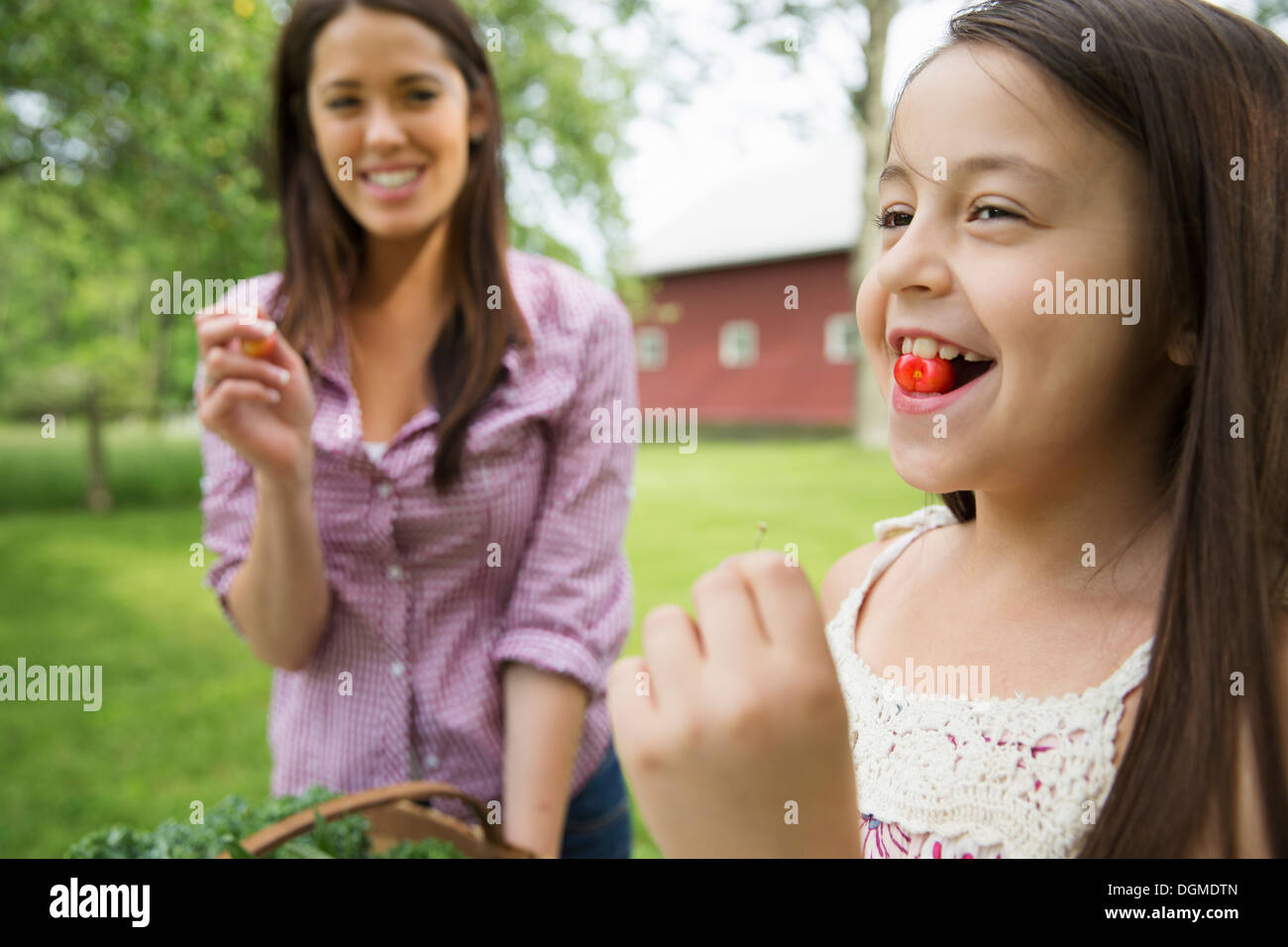 Family party. A child with a fresh cherry between her teeth. A young woman watching her and laughing. - Stock Image