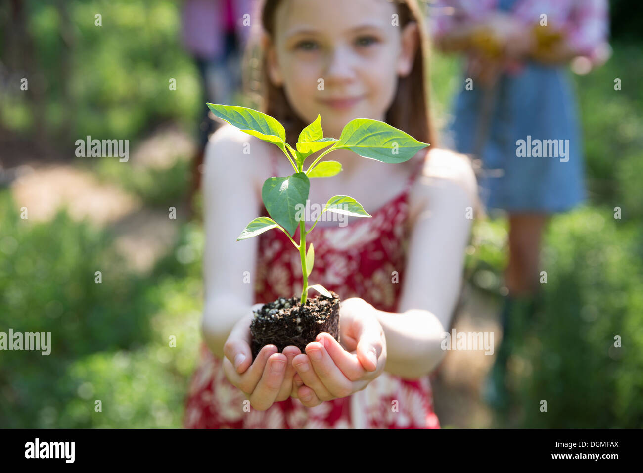 Garden. A young girl holding a young plant with green foliage and a healthy rootball in her hands. - Stock Image