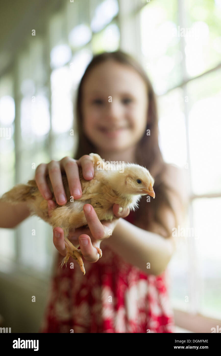 A young girl in a floral sundress, holding a young chick carefully in her hands. - Stock Image