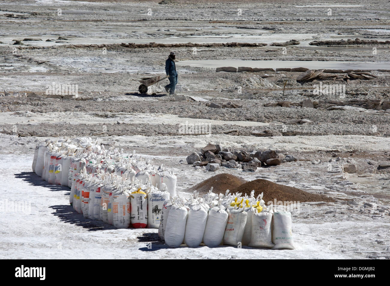 Salt worker with a wheelbarrow, flour sacks packed with salt at a salt lake, Altiplano, Potosi, southern Bolivia, South America - Stock Image