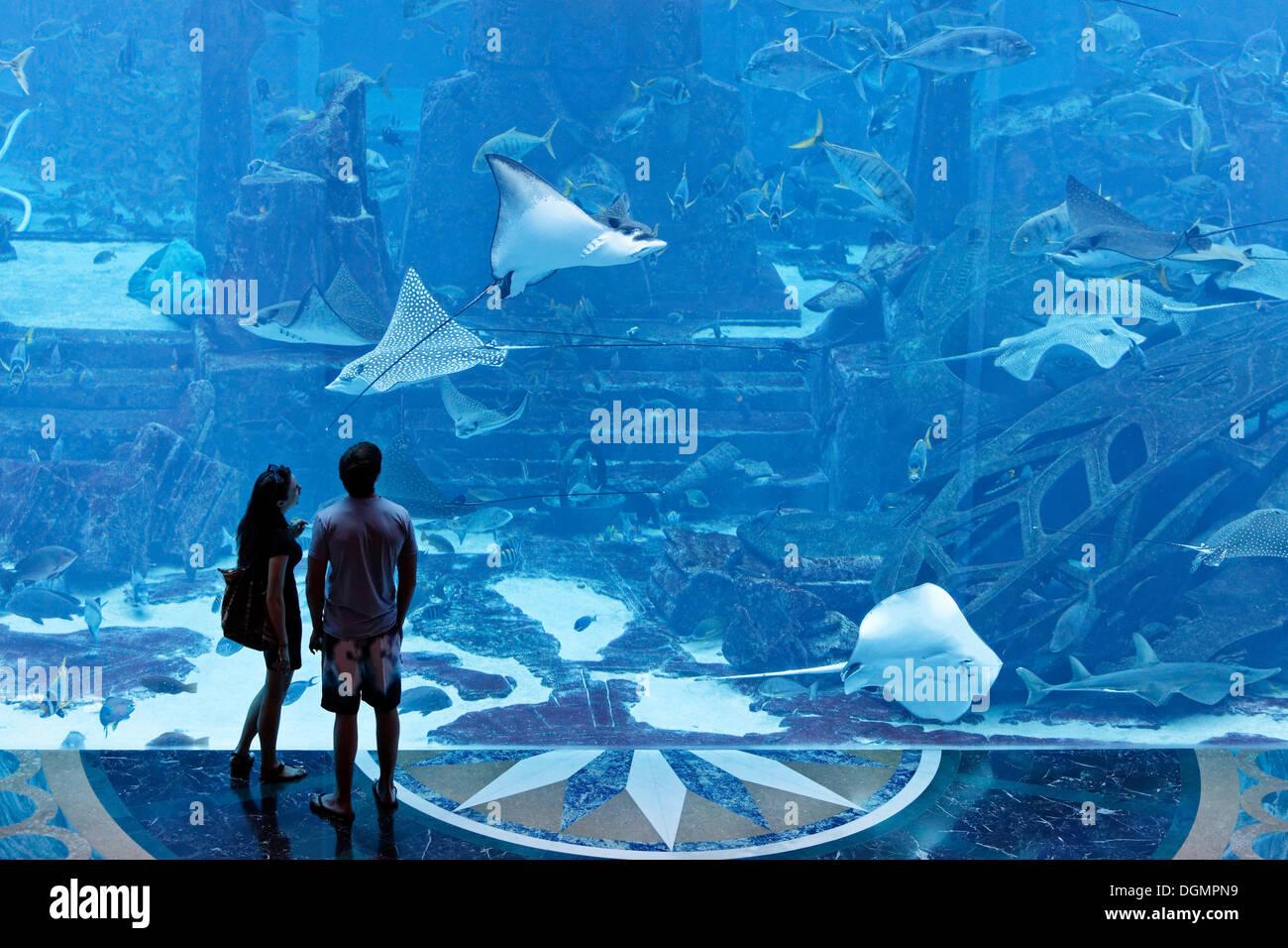 Couple observing stingrays in a gigantic aquarium, underwater world of the Ambassador Lagoon, Atlantis Hotel, The - Stock Image