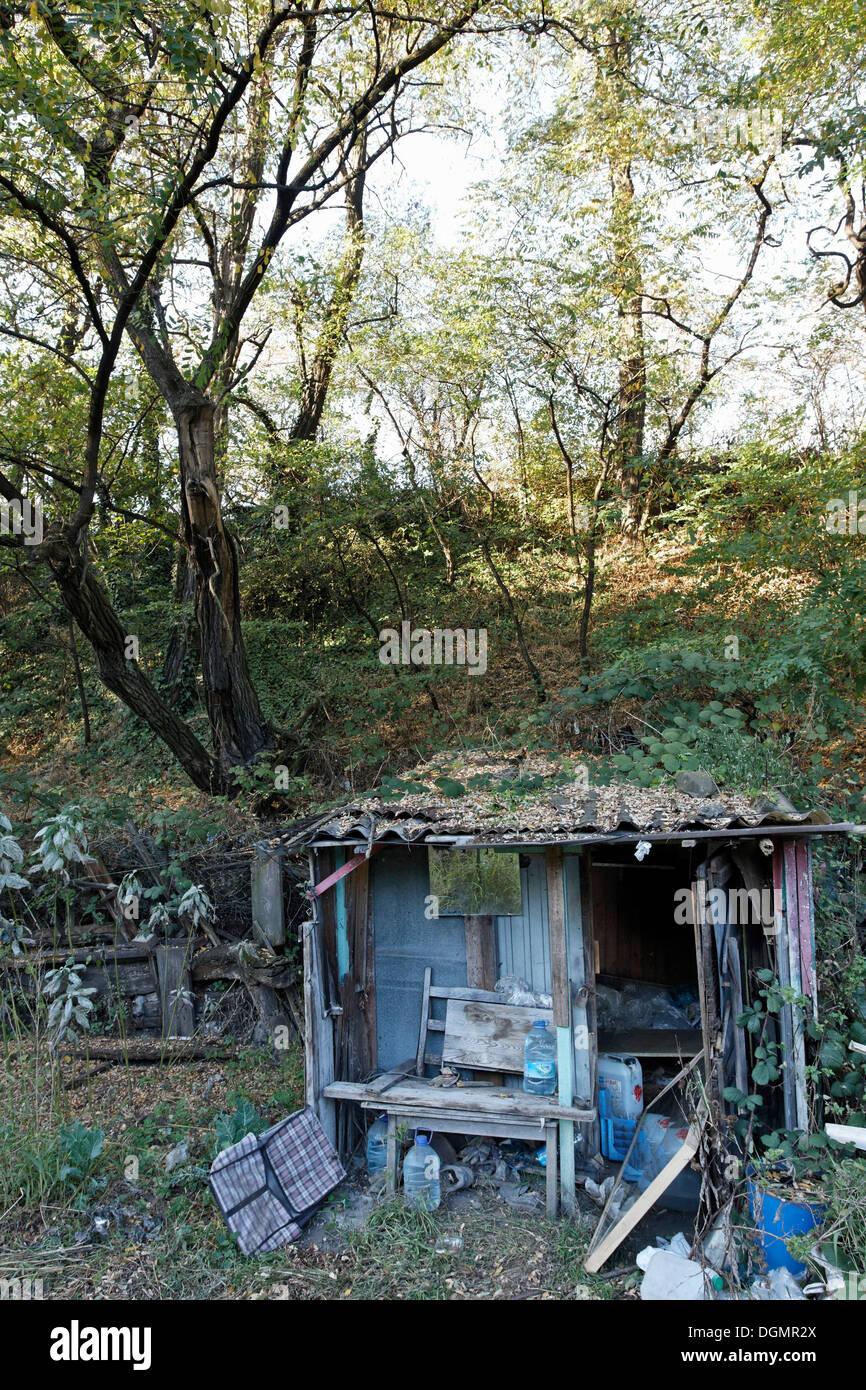 Abandoned hut of a wild small-scale allotment garden, neighborhood redevelopment, green belt project, Duisburg-Bruckhausen - Stock Image