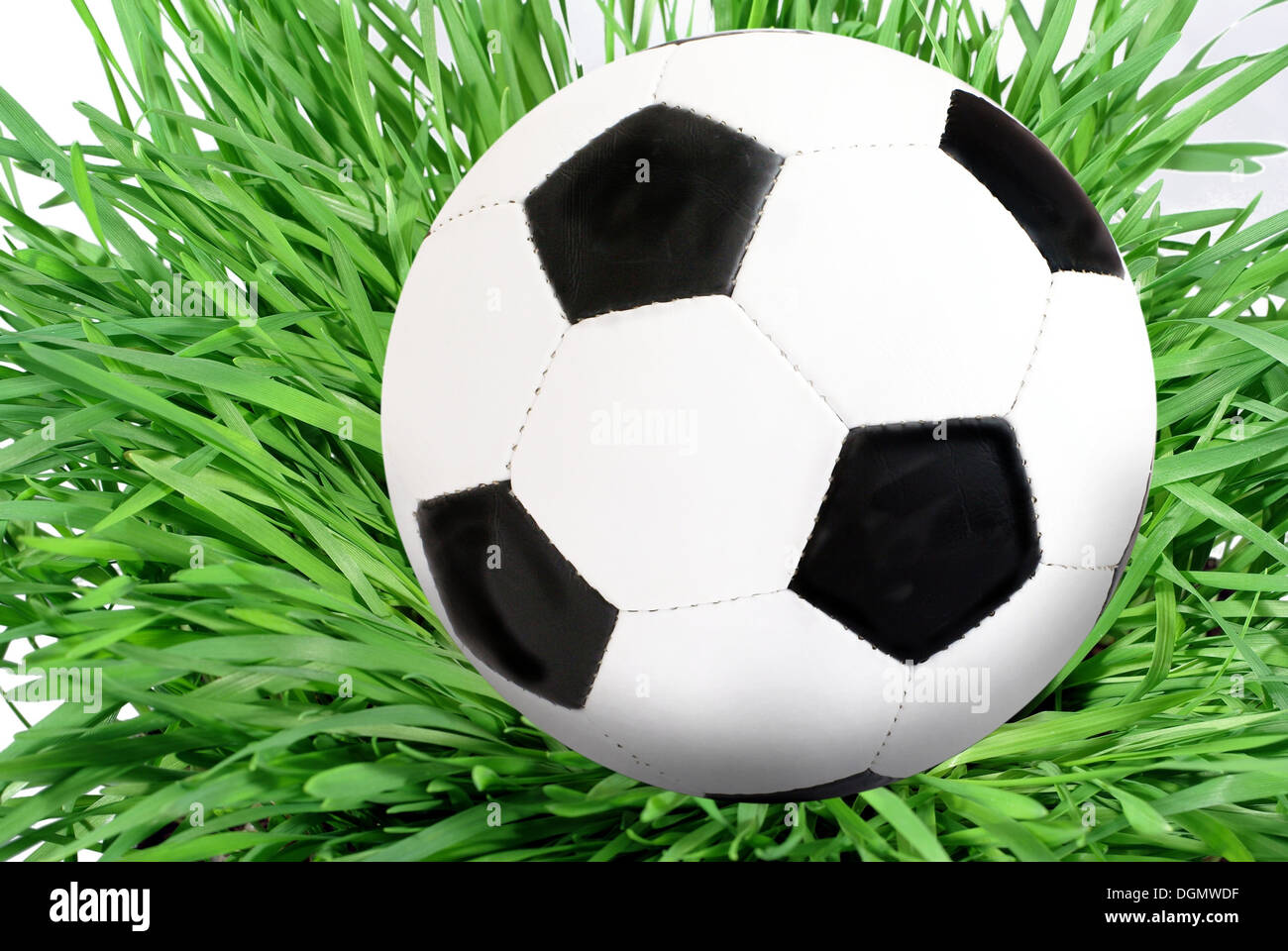 blackly white foot ball on grass Stock Photo