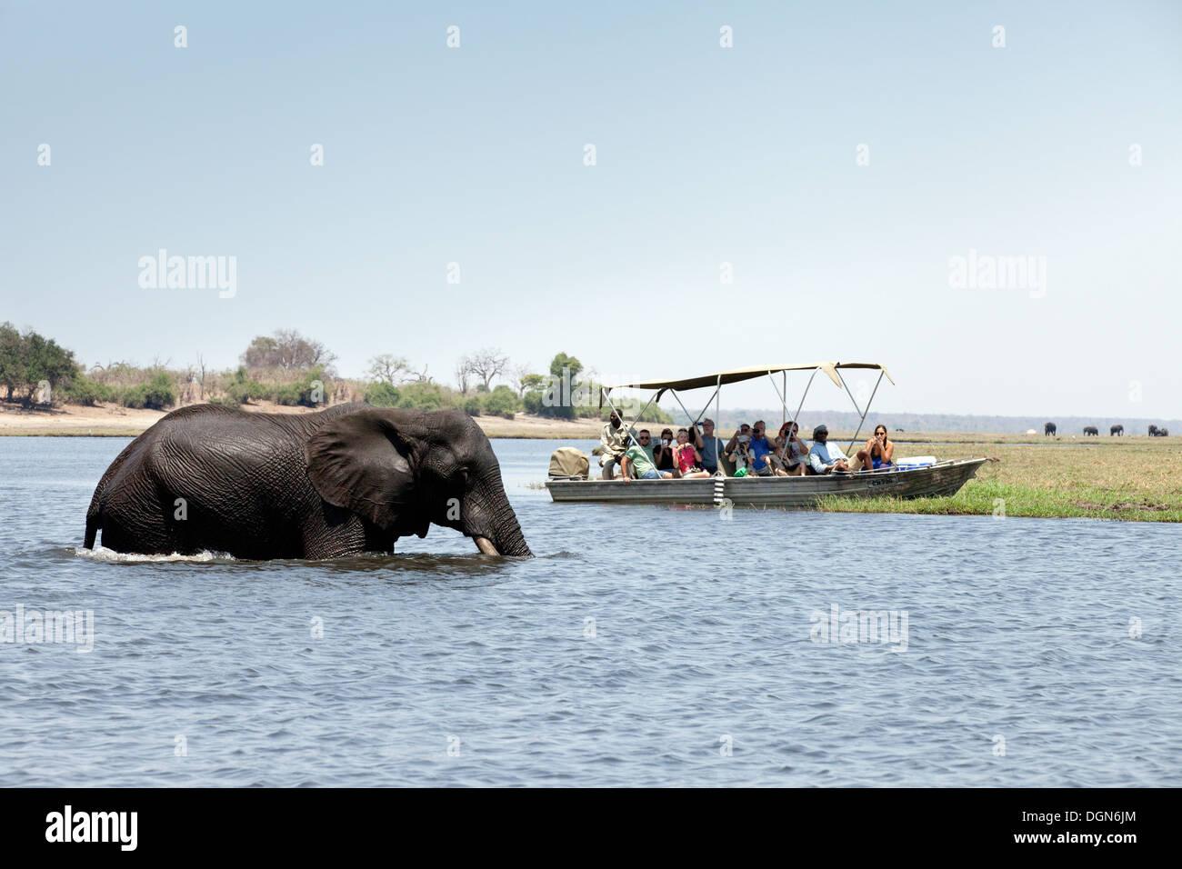 Tourists on an africa safari watching an elephant crossing the Chobe river, Chobe National Park, Botswana Africa Stock Photo