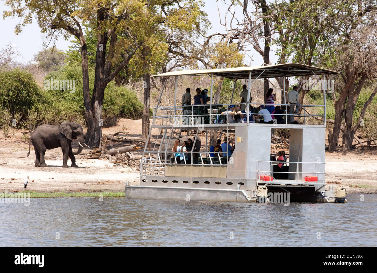Chobe river cruise - a safari boat and african elephant, Chobe national park, Botswana, Africa - Stock Image