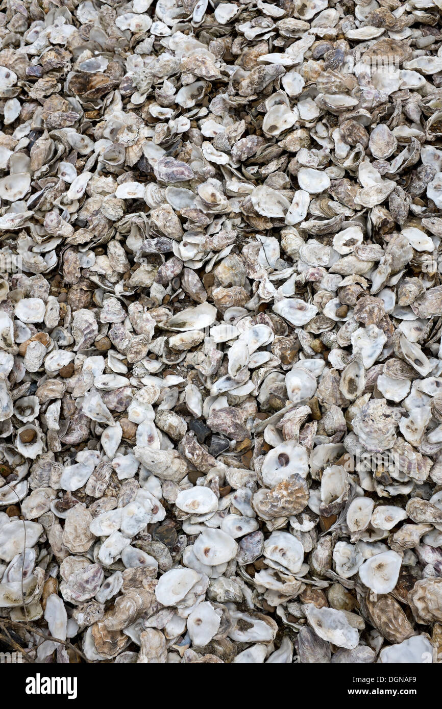 Oyster Shells Stock Photos Oyster Shells Stock Images Alamy
