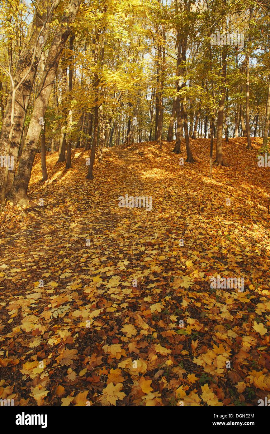 Autumn park background, HDRI Stock Photo