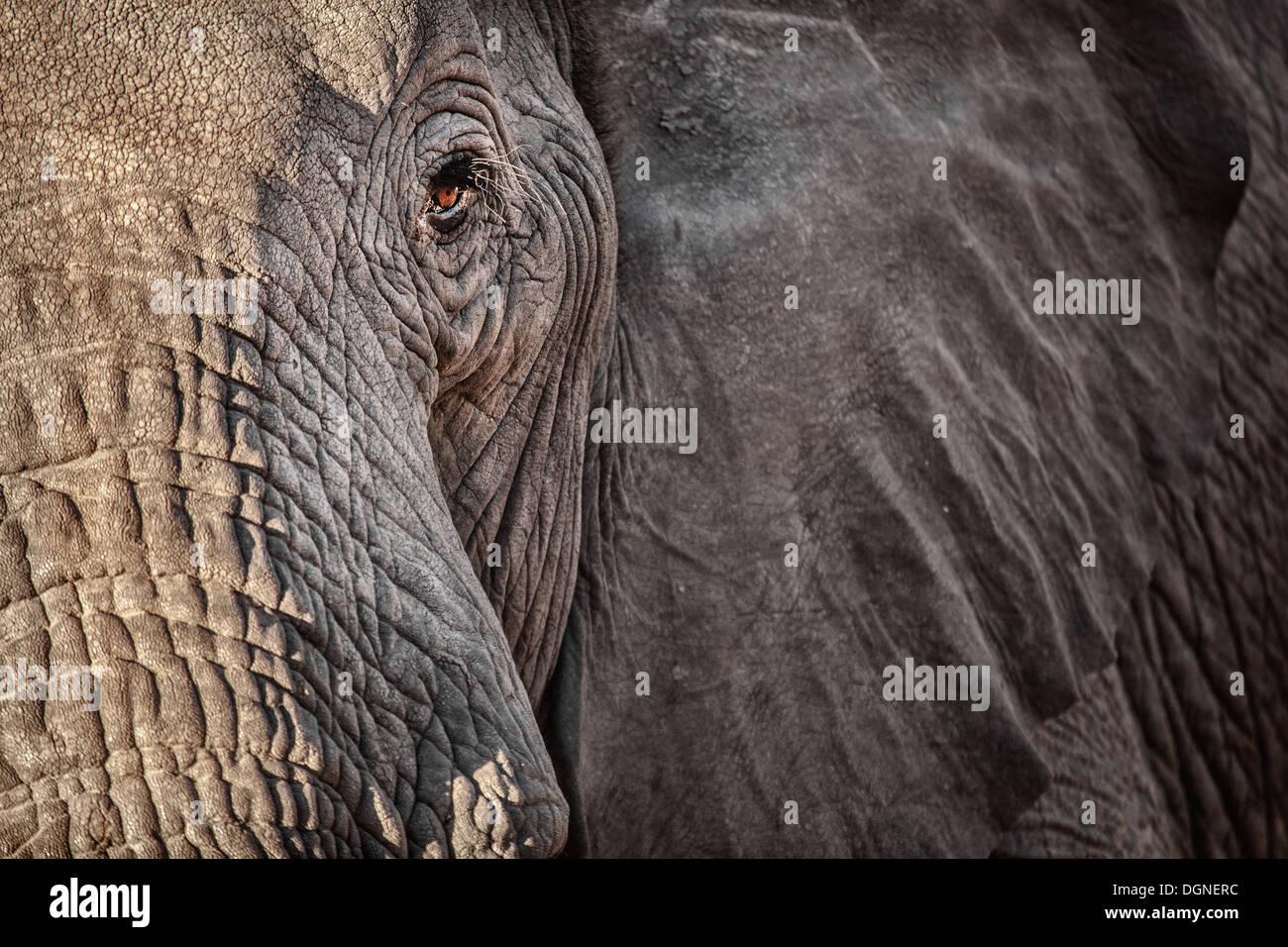 An Elephants Eye - Stock Image