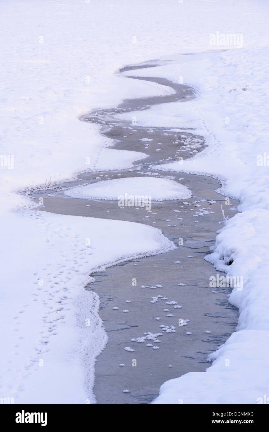 Snow and ice in a drained carp pond, animal tracks in the snow alongside a stream, Uhyst, Saxony, Germany - Stock Image