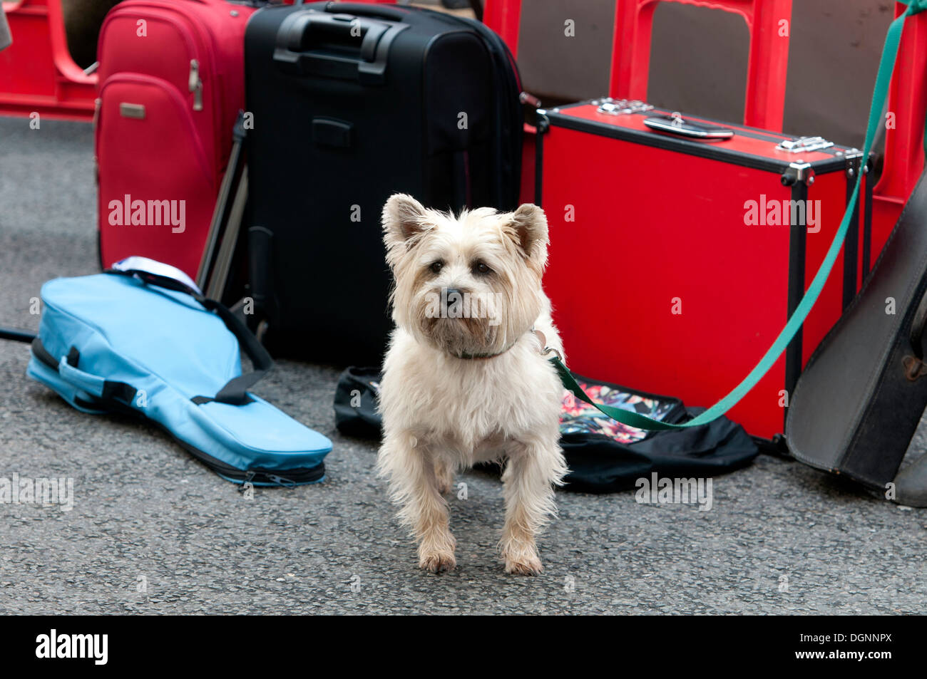 A dog tied up - Stock Image