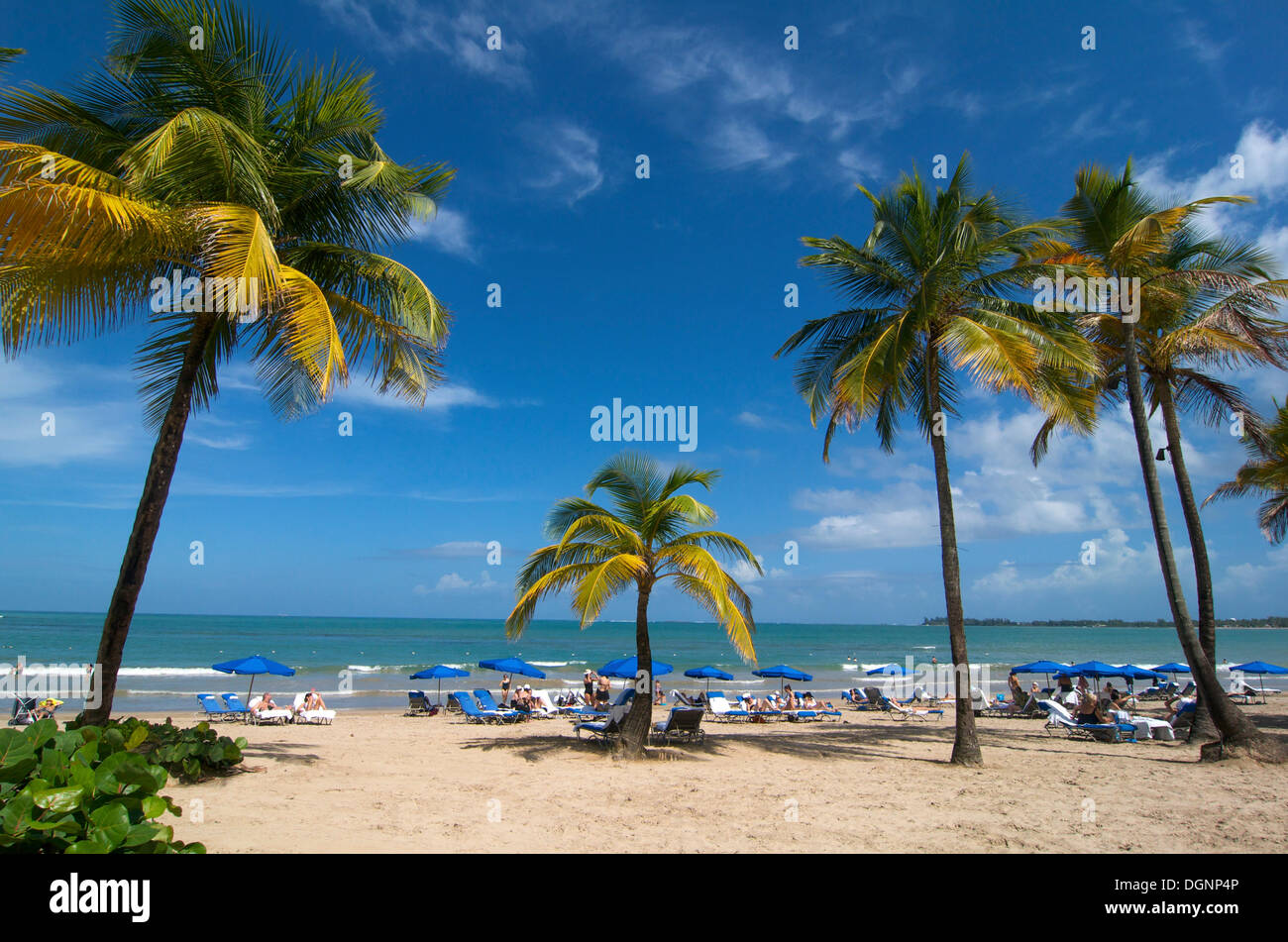 Beach with palm trees in San Juan, Puerto Rico, Caribbean - Stock Image