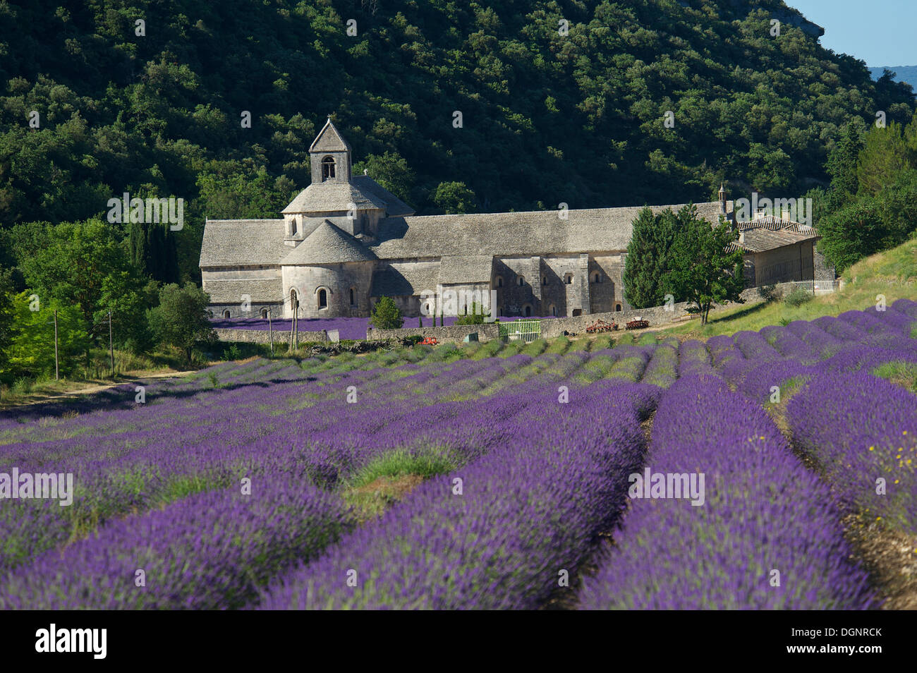 Cistercian abbey, Abbaye de Sénanque with a lavender field, Vaucluse, Provence, Region Provence-Alpes-Côte d'Azur, Stock Photo