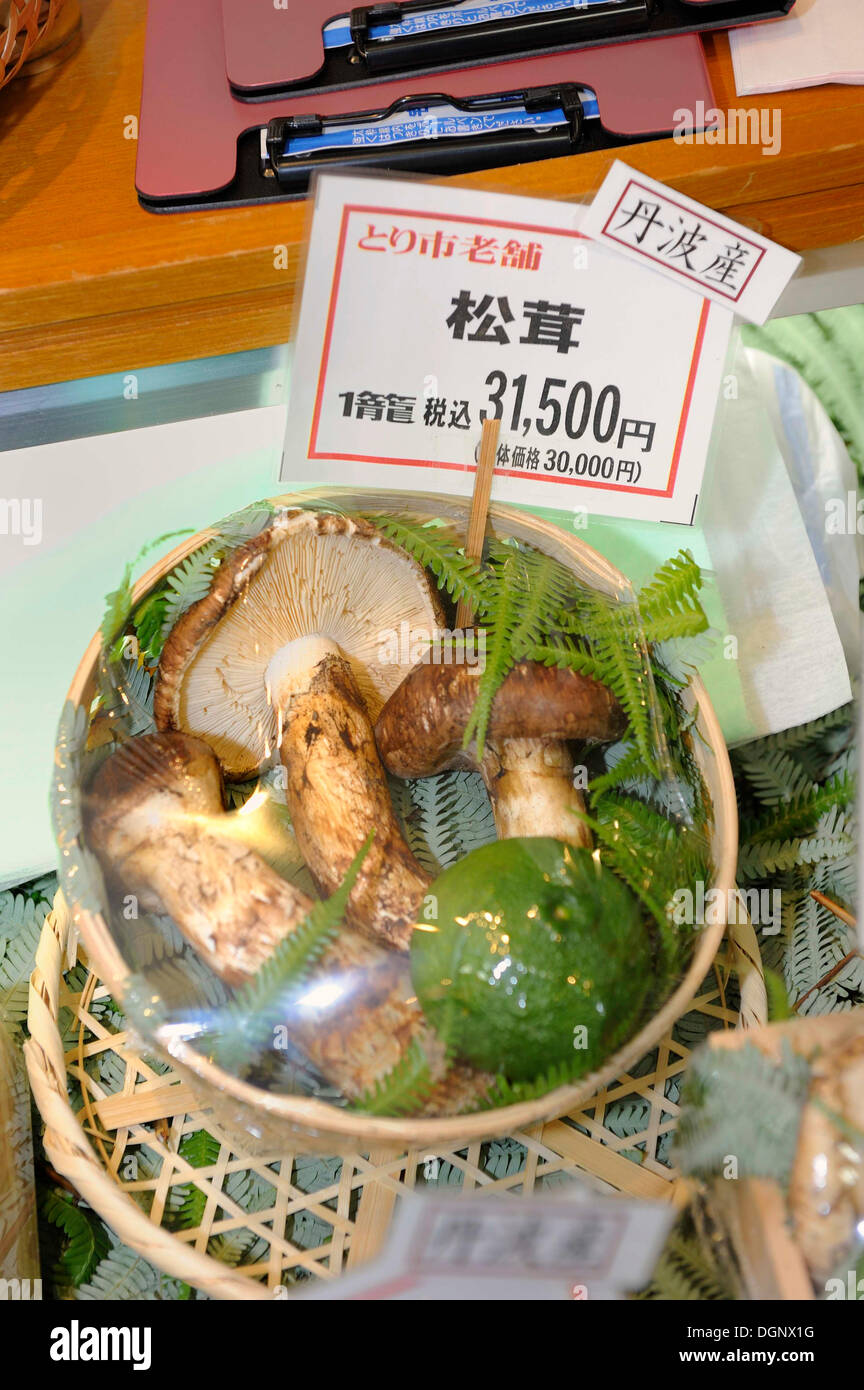 Matsutake, the most expensive edible mushroom, here offered wrapped as a gift in a deli, Kyoto, Japan, East Asia, Asia - Stock Image