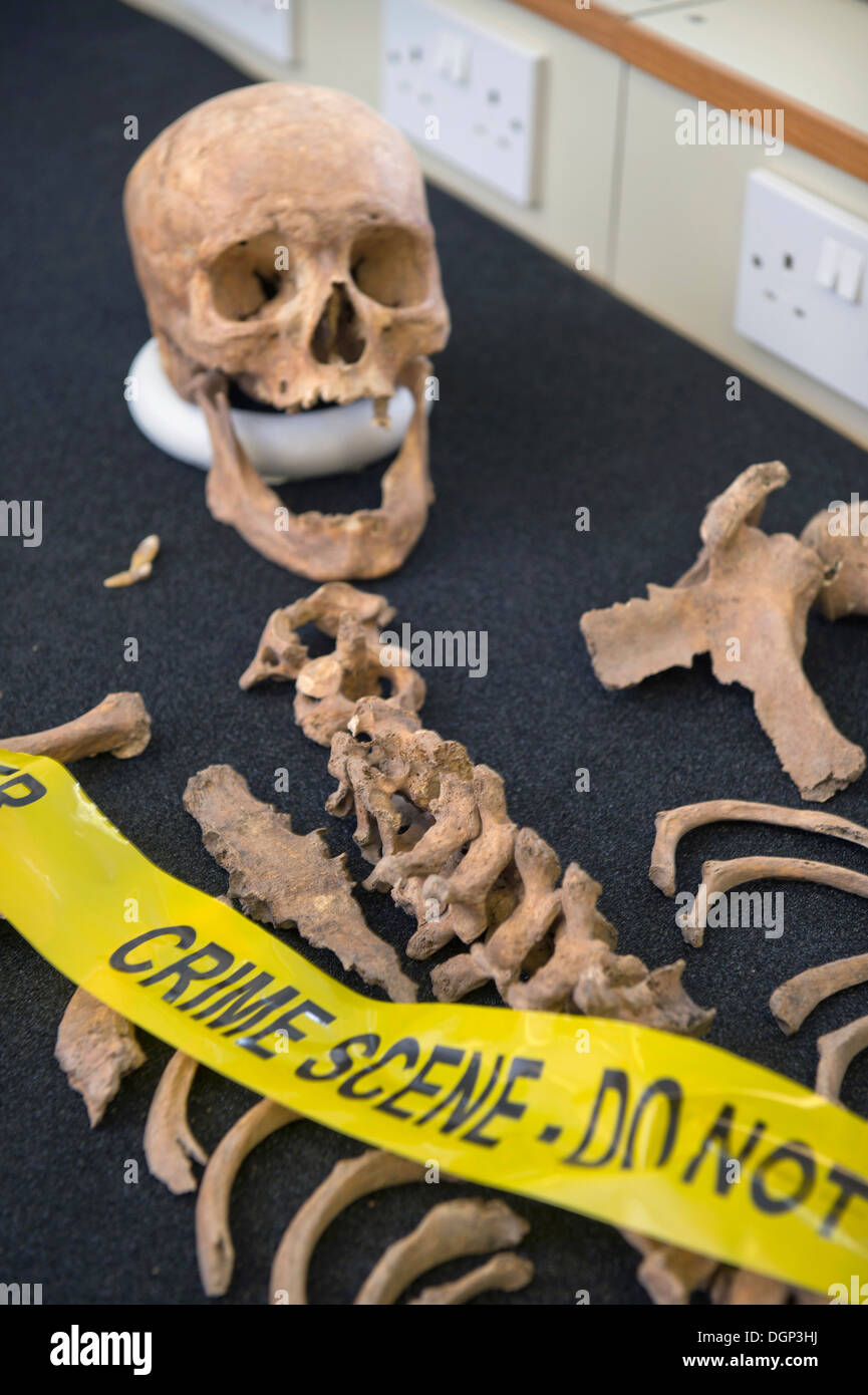 Training Exhibits During A Forensic Anthropology Lecture At The Stock Photo Alamy