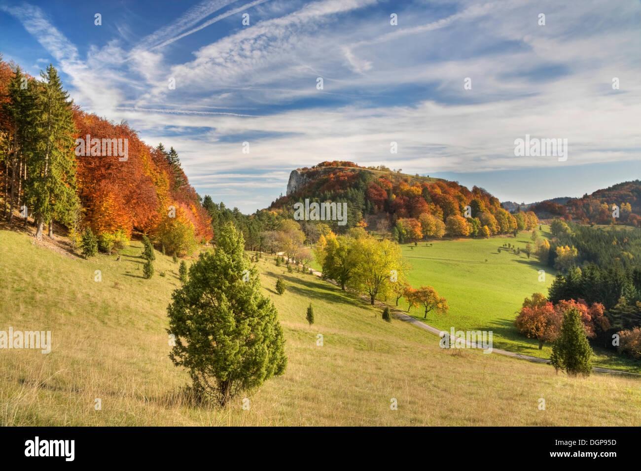 Juniper bushes on Lochen mountain in autumn, Zollernalb district, Swabian Alps, Baden-Wuerttemberg - Stock Image