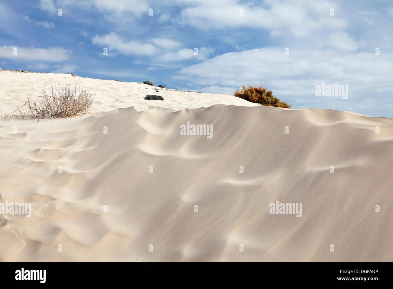 Sand dunes, dune landscape, Risco del Paso, Fuerteventura, Canary Islands, Spain - Stock Image