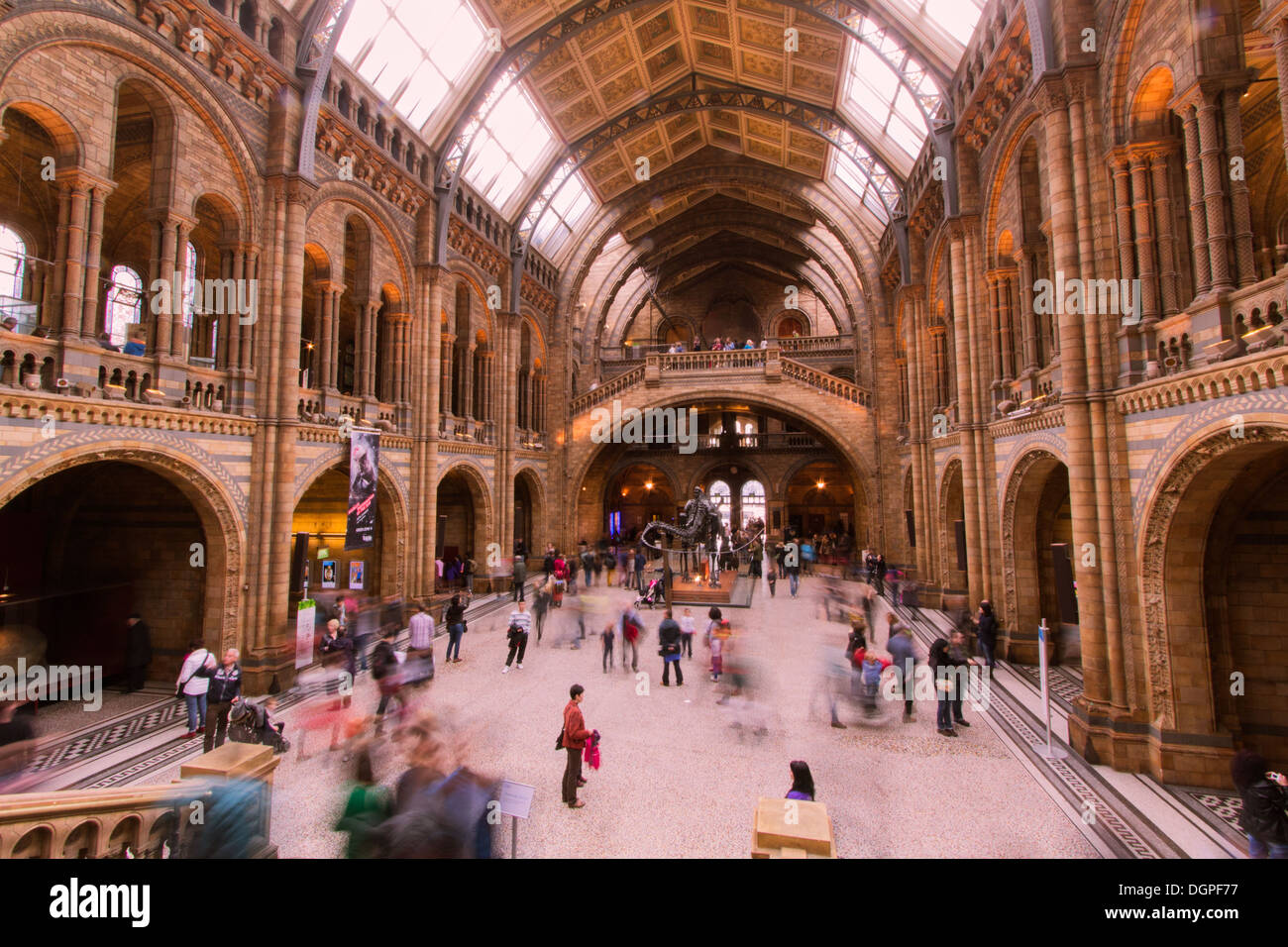 Main Hall of the Natural History Museum London - Stock Image