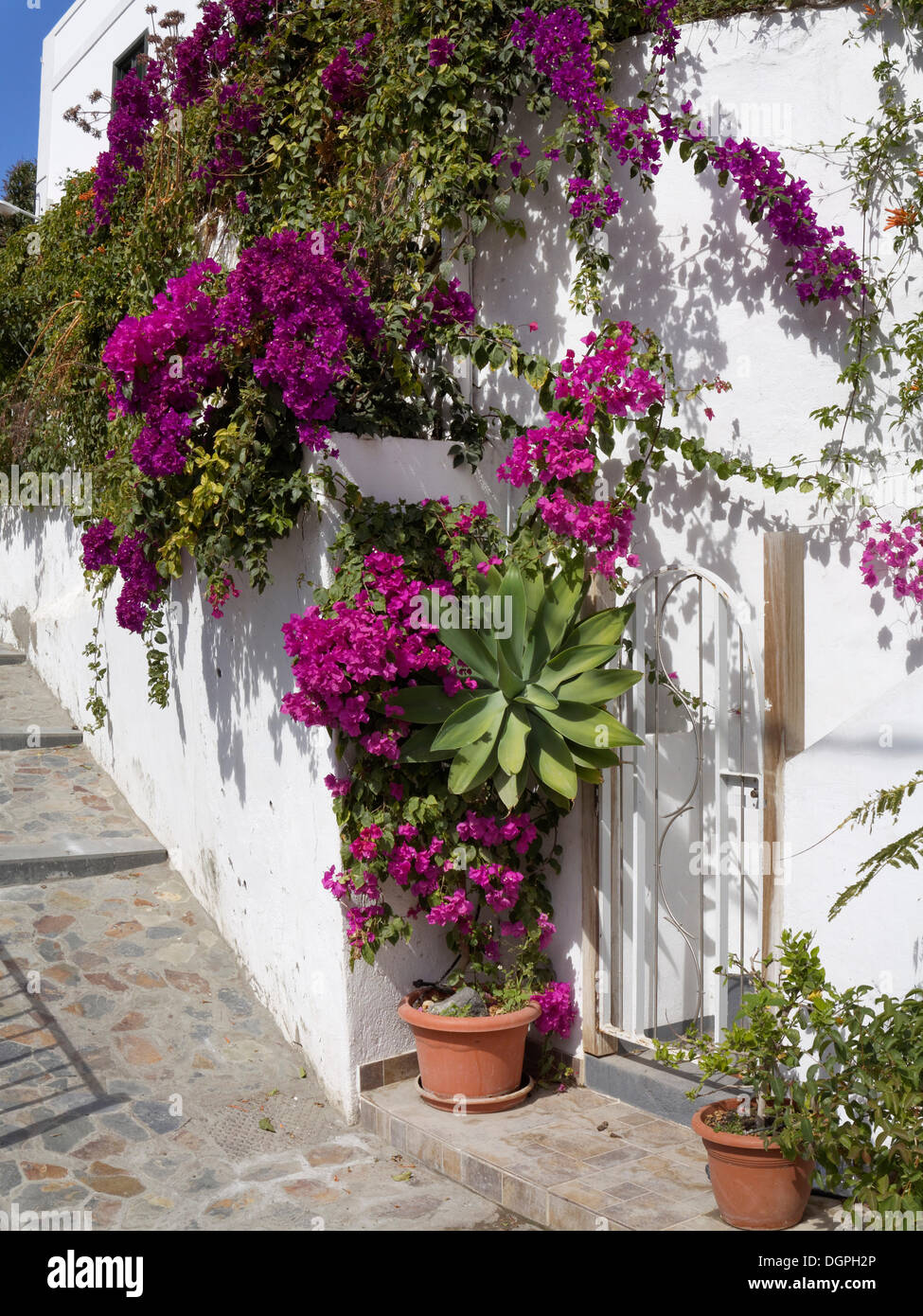 House wall with bougainvillea in La Calera, Valle Gran Rey valley, La Gomera, Valle Gran Rey, Canary Islands, Spain - Stock Image