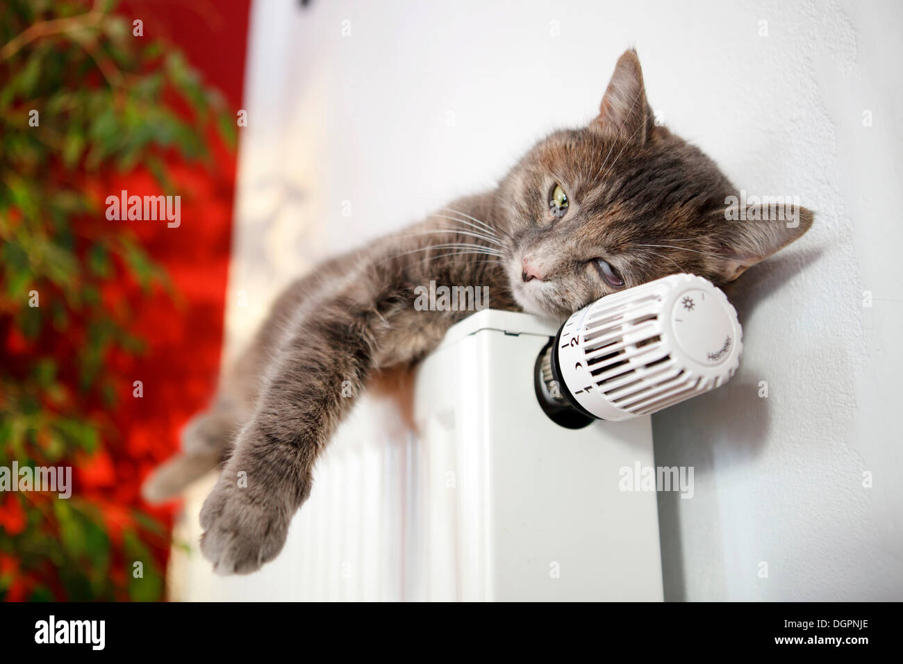 Lazy cat lying on a heater - Stock Image