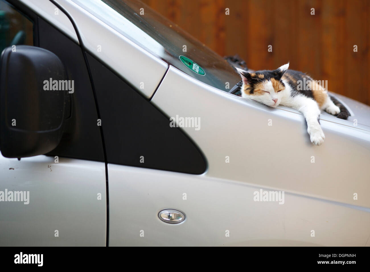 Cat resting between the windshield and hood of a car - Stock Image