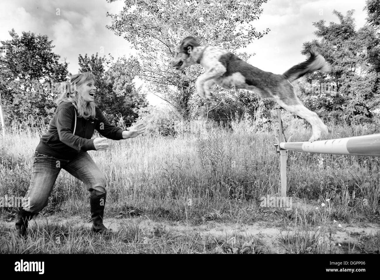 Dog jumping from a boom barrier into the arms of its trainer standing with open arms to catch it - Stock Image