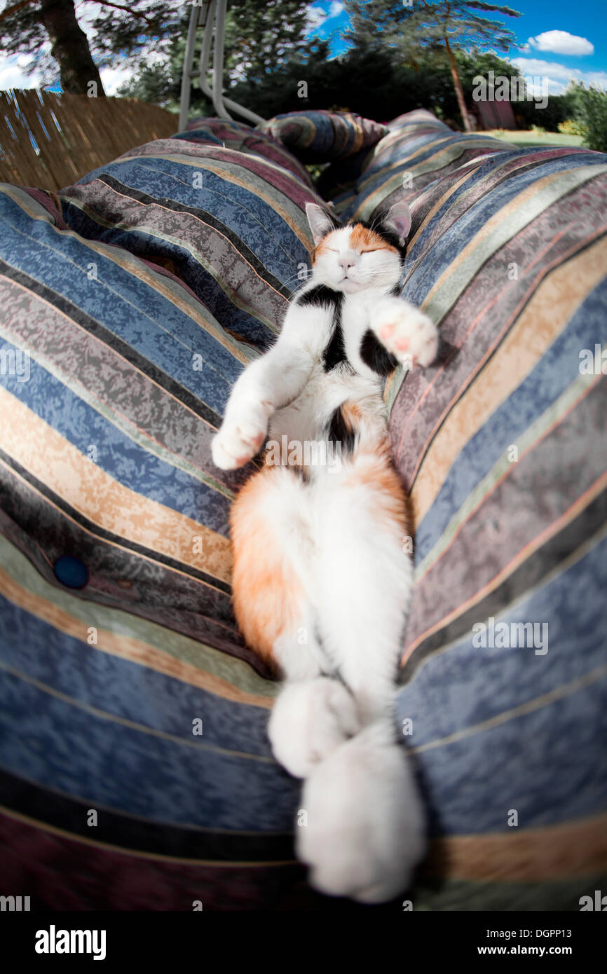 Cat relaxing on its back and sleeping in a hammock - Stock Image
