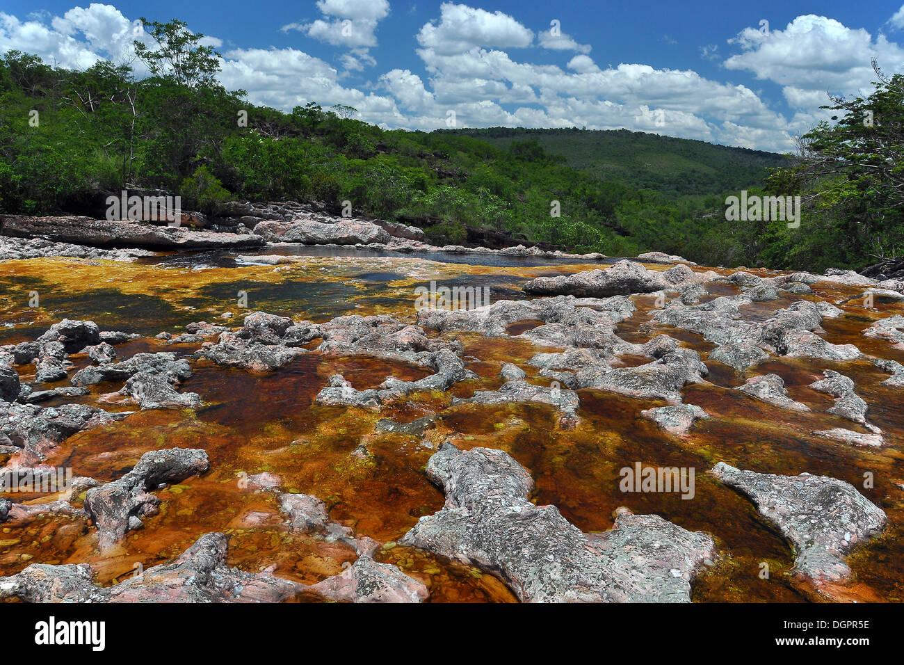 Blackwater river near Lencois, Chapada Diamantina, Bahia, Brazil, South America - Stock Image