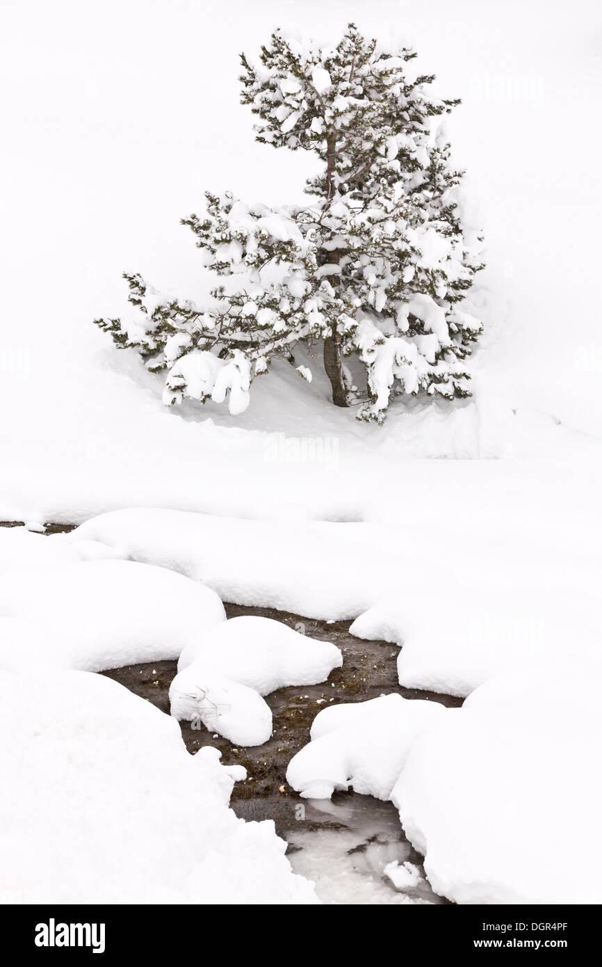 Snow in march on the Puerto de San Glorio (1609 metres), Picos de Europa, Spain - Stock Image