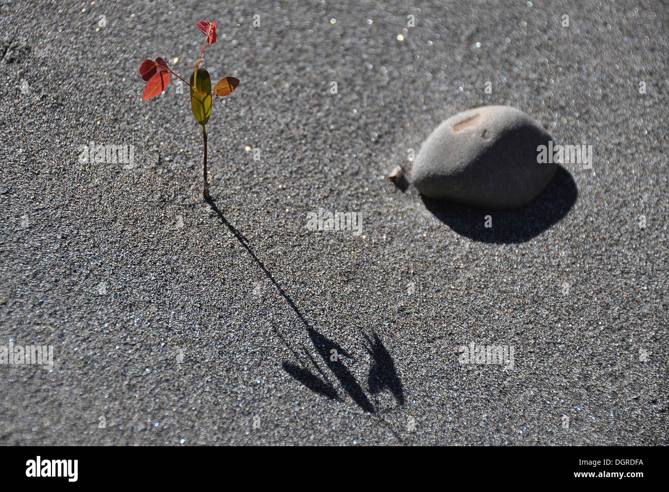 Seedling growing in the desert sand - Stock Image