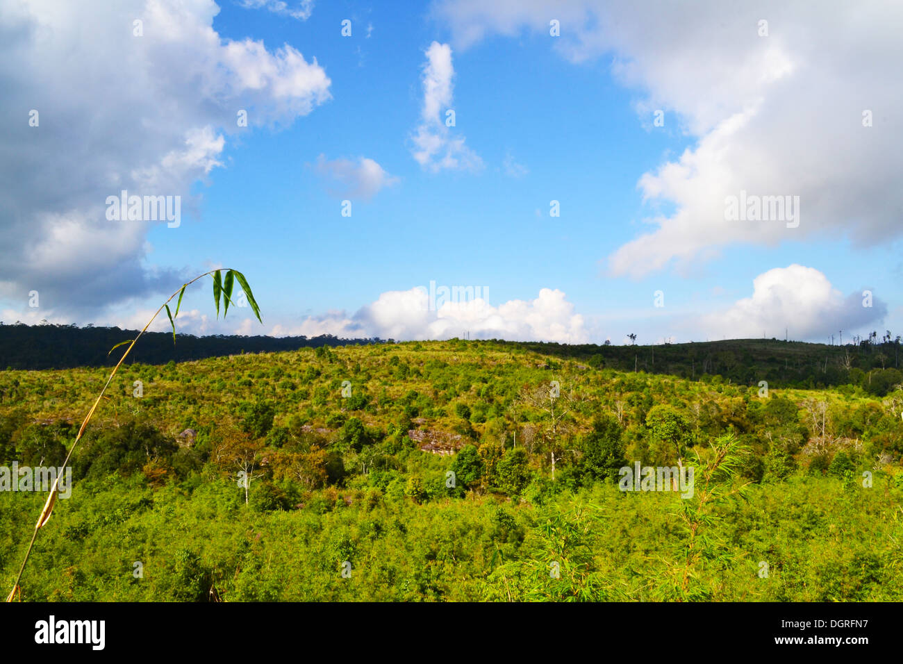 Mountains full of trees with blue sky - Stock Image