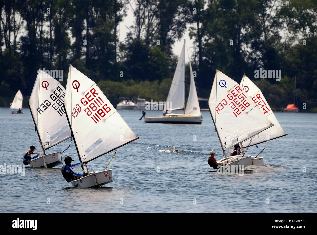 Dinghy sailing for children, optimists on the Mueritz, Mecklenburg Lake District, Mecklenburg-Western Pomerania - Stock Image