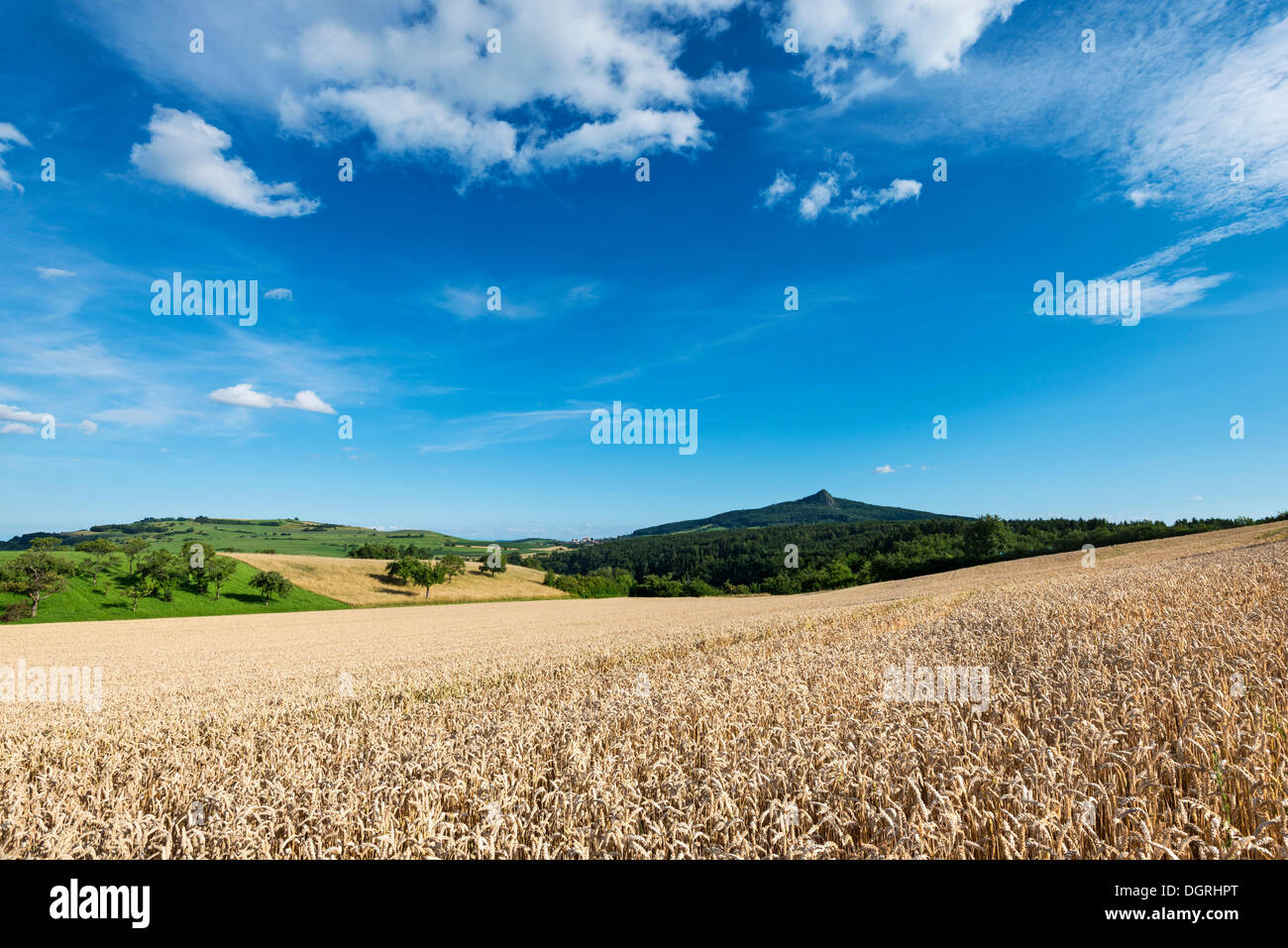 View of a ripe wheat field and the Hohenstoffeln volcano, Baden-Wuerttemberg - Stock Image