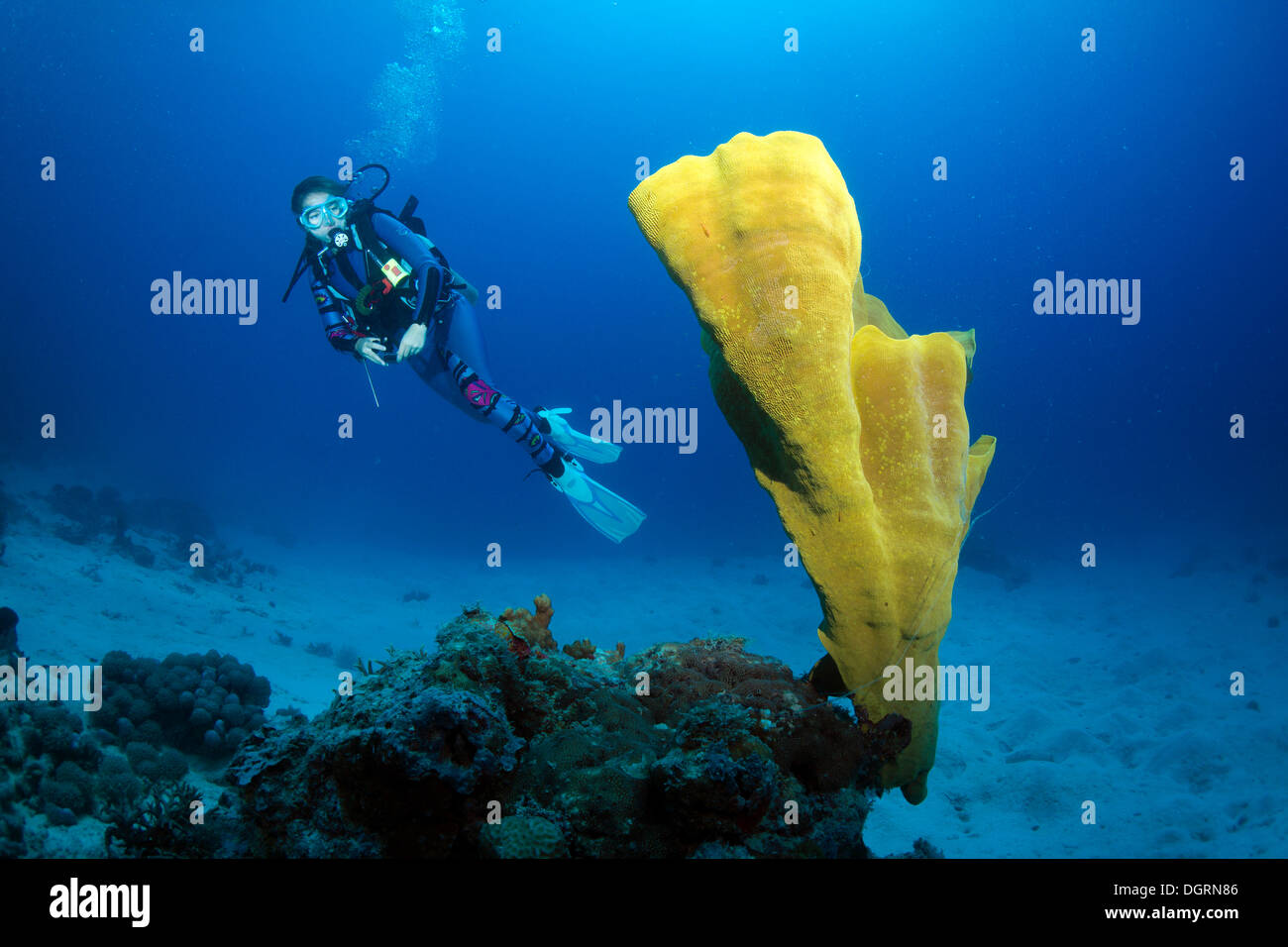 Scuba diver in a coral reef, South China Sea, Minuit, -, Mimaropa, Philippines - Stock Image