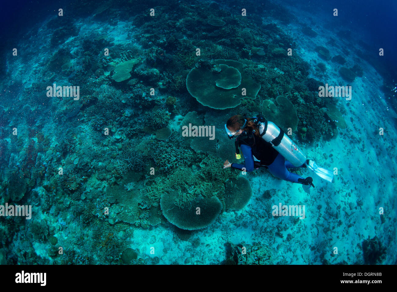 Diver at a coral reef, South China Sea, Mulaong, -, Mimaropa, Philippines - Stock Image