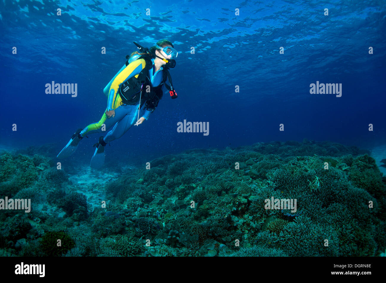 Scuba diver at a coral reef, South China Sea, Mulaong, -, Mimaropa, Philippines - Stock Image