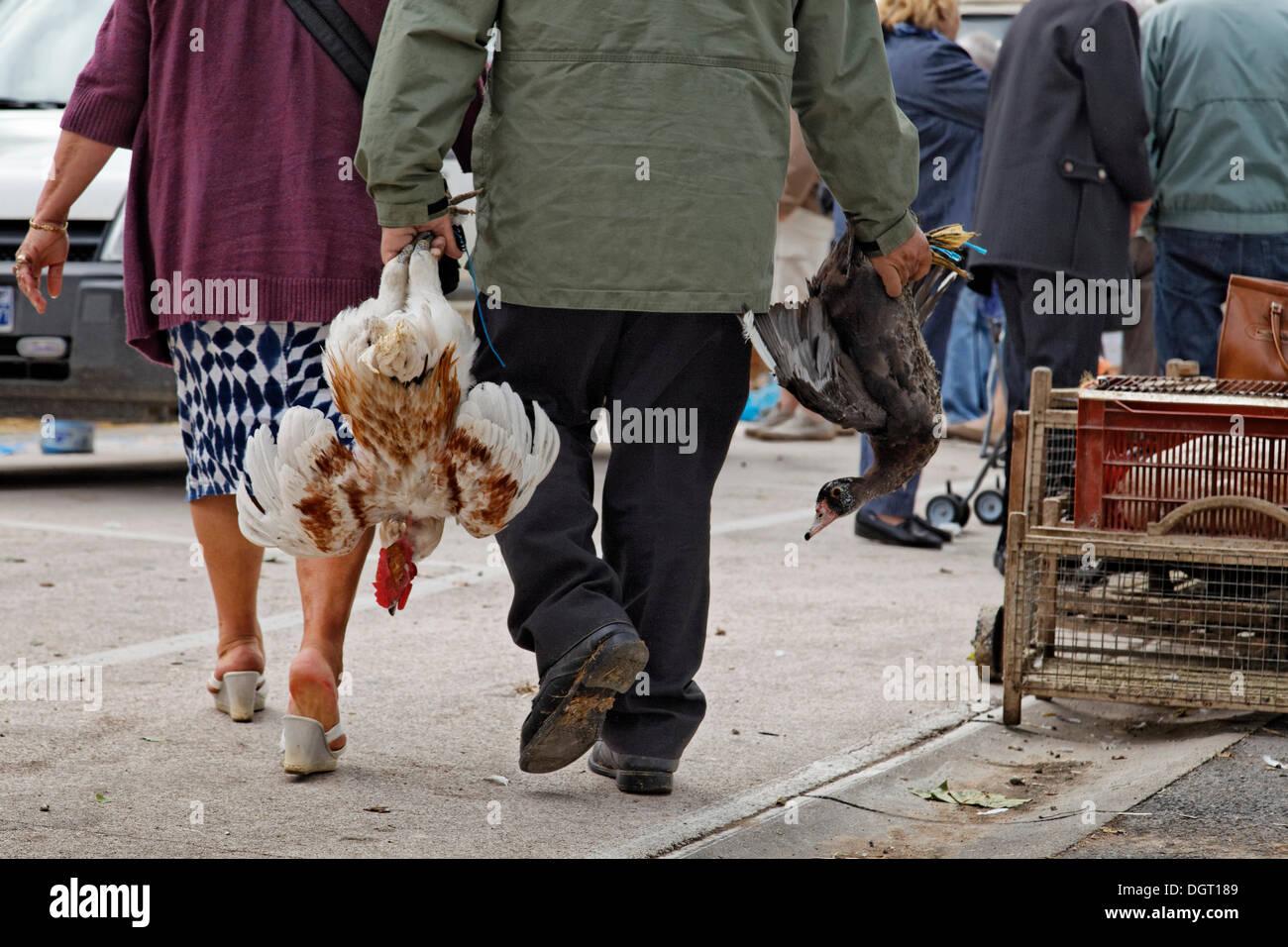 Louhans poultry market in Bresse every Monday morning, Tournus, Burgundy region, department of Saône-et-Loire, France, Europe - Stock Image
