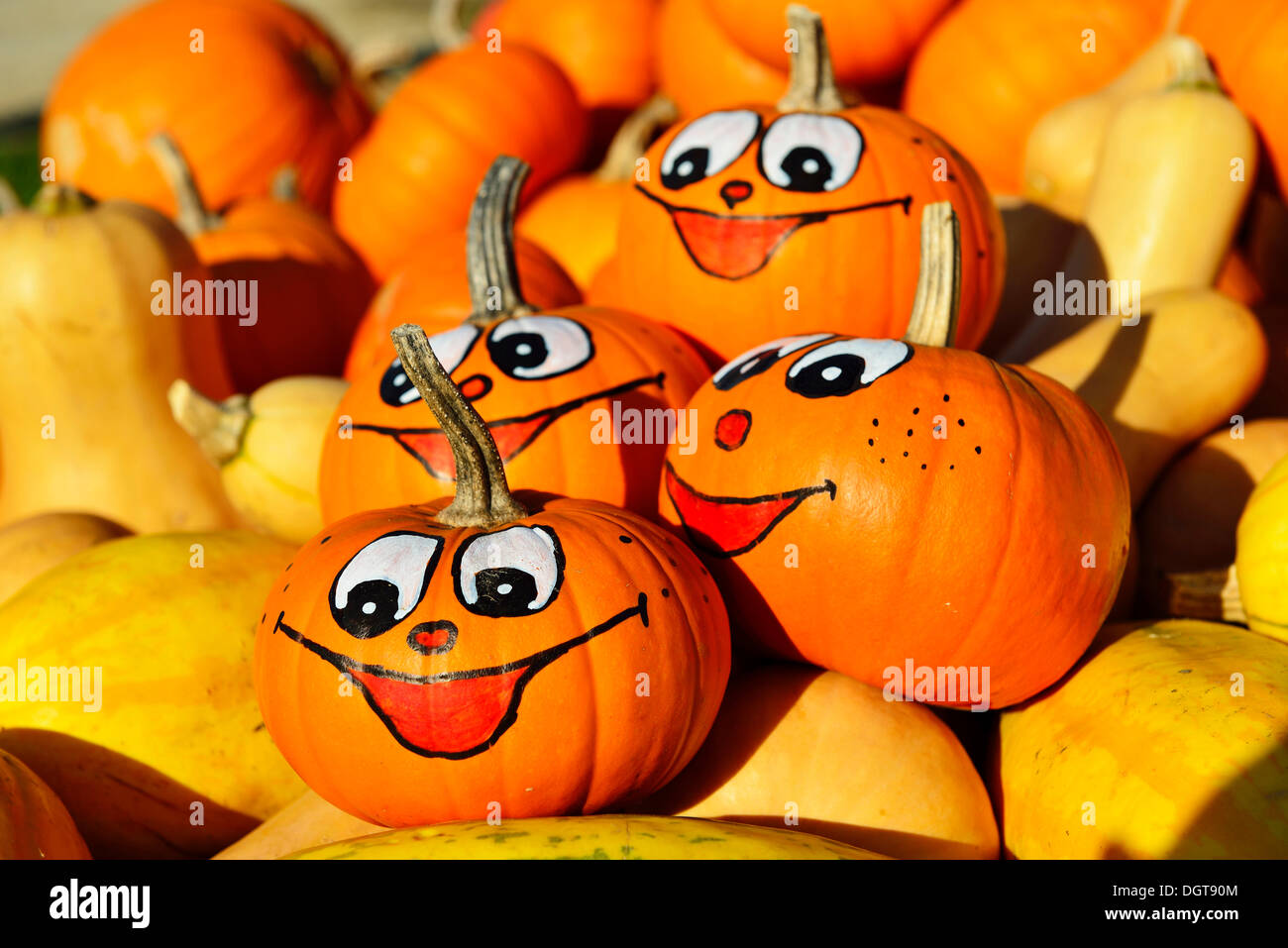 Gourds, some with painted faces, Chiemgau, Upper Bavaria, Bavaria - Stock Image