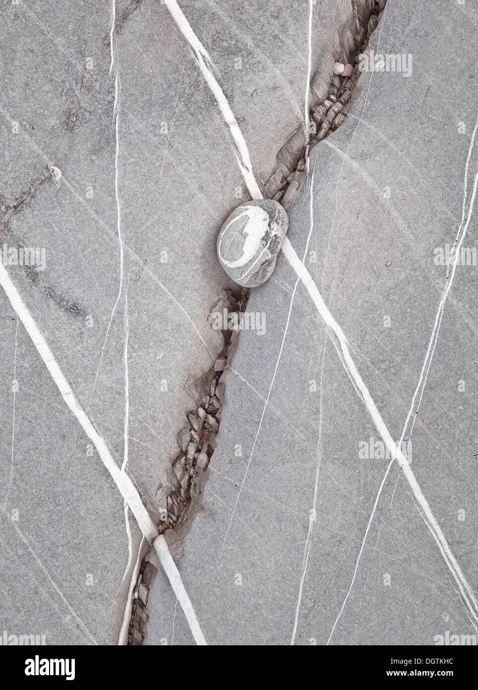 Quartz banding in Blue Lias limestone with pebble - Stock Image