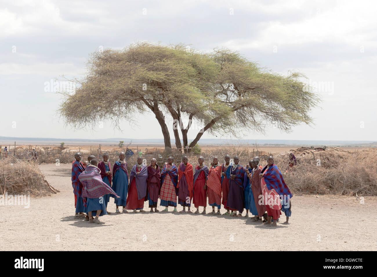 Group of women gathered under an acacia tree, Masai, ethnology, Kiloki village, Savannah, Ngorongoro Conservation Area - Stock Image