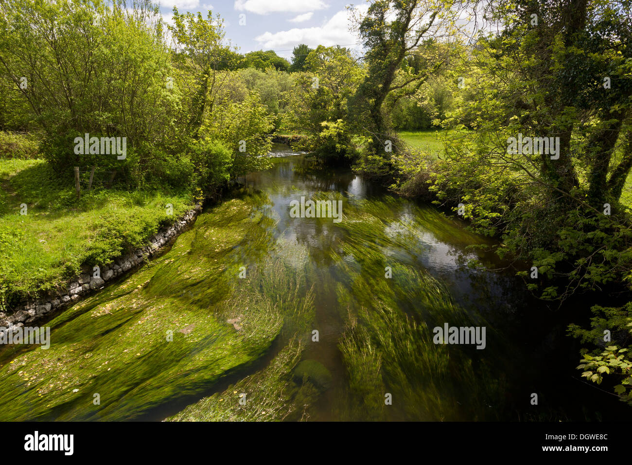 Rural idyll - the River Fergus, full of Water Crowfoot and other aquatic plants, below Lough Inchiquin, Co. Clare, Ireland. - Stock Image